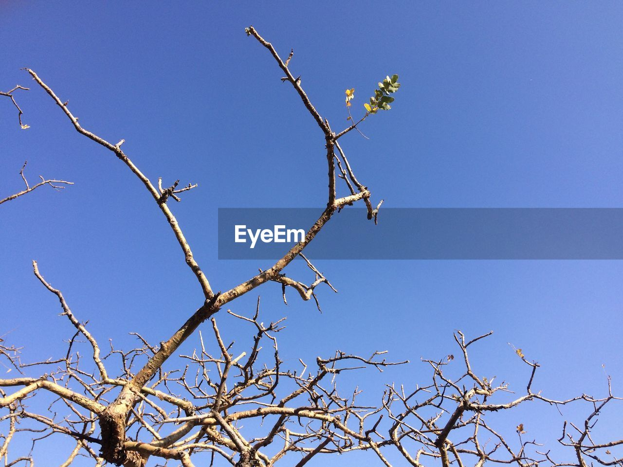 low angle view, clear sky, branch, blue, nature, outdoors, tree, day, no people, animals in the wild, beauty in nature, growth, animal themes, bird, bare tree, flower, sky, perching, spread wings, freshness