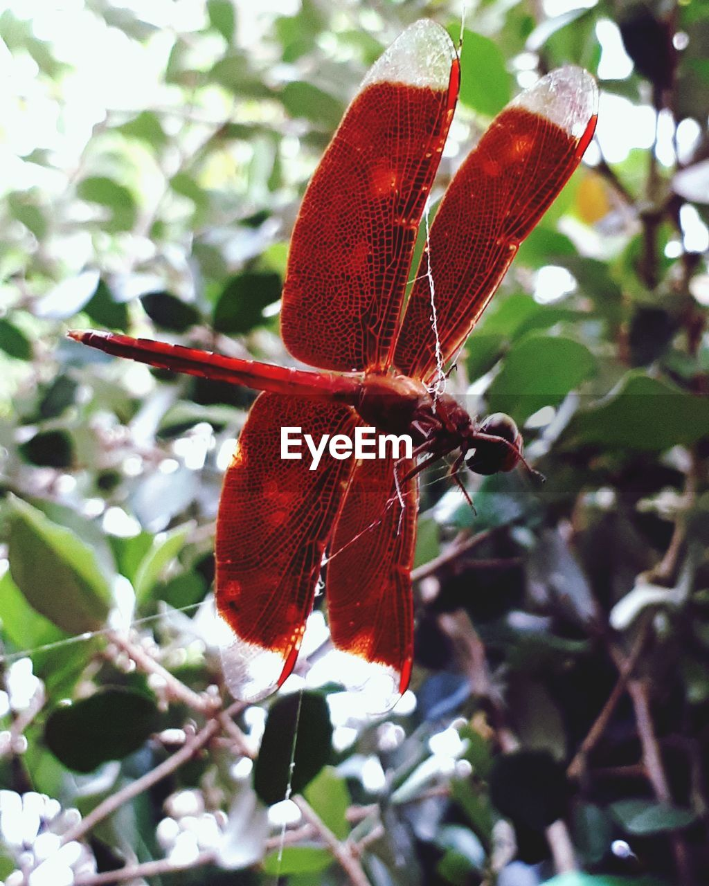 plant, close-up, red, beauty in nature, invertebrate, animals in the wild, animal wing, focus on foreground, nature, no people, growth, insect, animal themes, one animal, animal, animal wildlife, day, flower, plant part, leaf, butterfly - insect, outdoors, butterfly, flower head, pollination