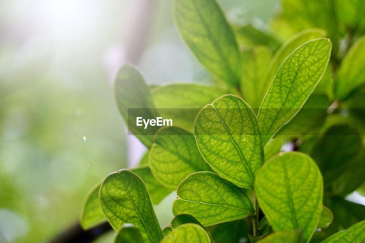 leaf, plant part, green color, plant, growth, close-up, beauty in nature, nature, focus on foreground, day, no people, outdoors, freshness, selective focus, vulnerability, fragility, sunlight, leaves, leaf vein, tranquility