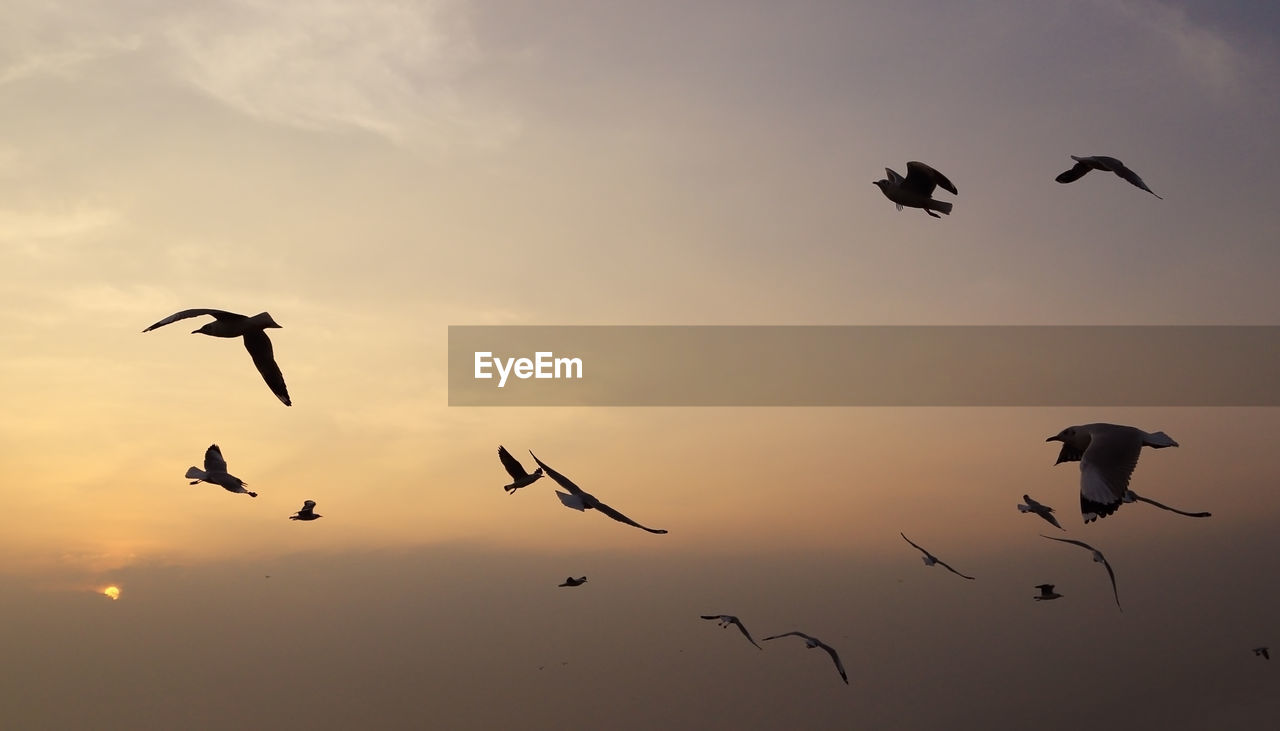 bird, animals in the wild, group of animals, animal themes, vertebrate, animal wildlife, animal, sunset, sky, flying, silhouette, mid-air, beauty in nature, spread wings, large group of animals, nature, no people, low angle view, cloud - sky, flock of birds, eagle