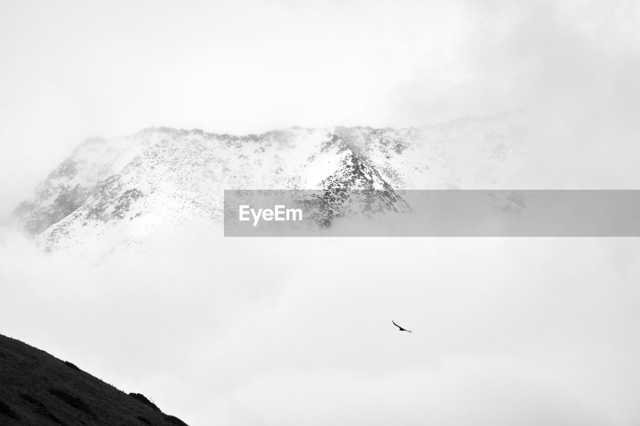 vertebrate, sky, animal, flying, animal themes, bird, beauty in nature, animals in the wild, no people, animal wildlife, mountain, scenics - nature, day, fog, tranquil scene, cloud - sky, nature, low angle view, mid-air, outdoors, snowcapped mountain