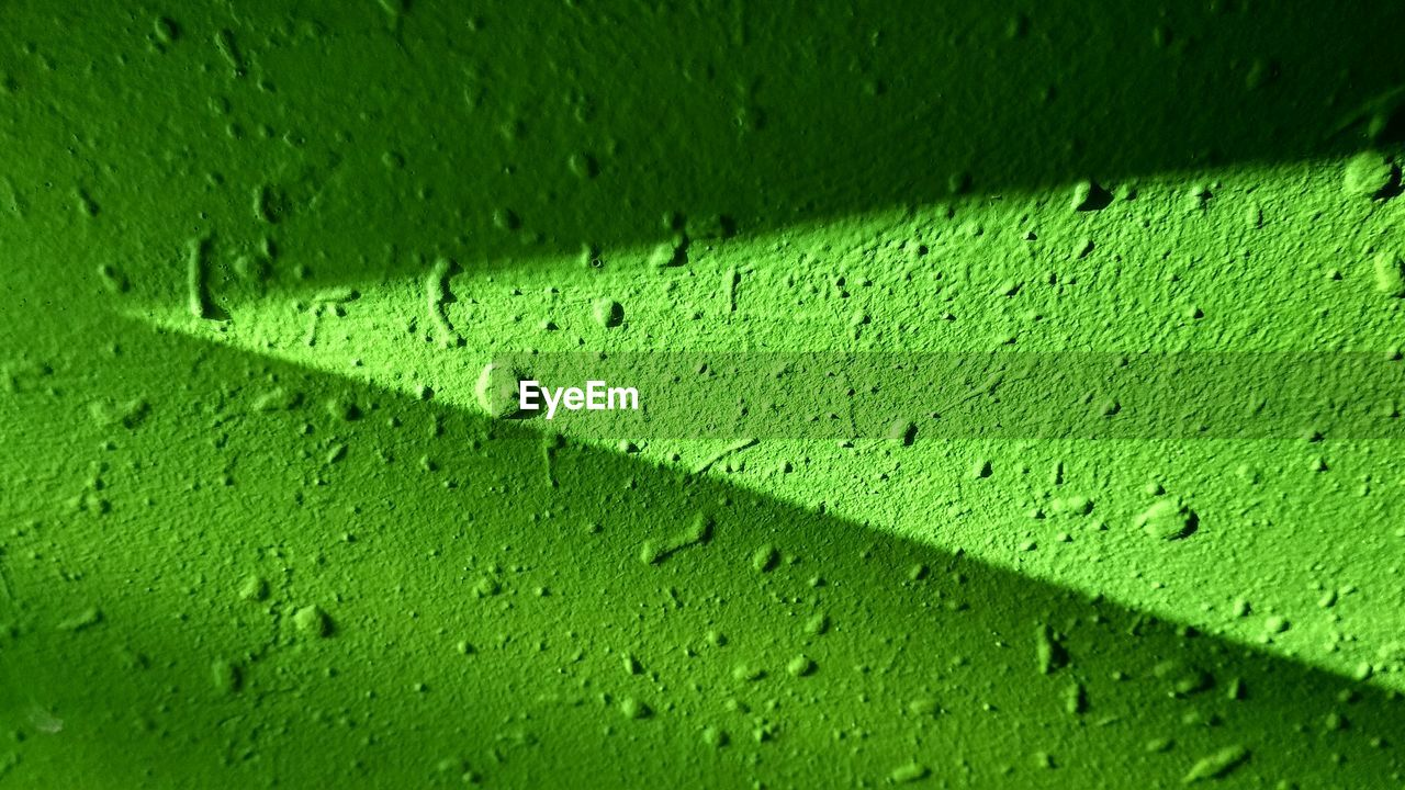green color, full frame, close-up, no people, backgrounds, drop, textured, wet, water, day, nature, outdoors, pattern, leaf, plant part, built structure, architecture, selective focus, raindrop, purity