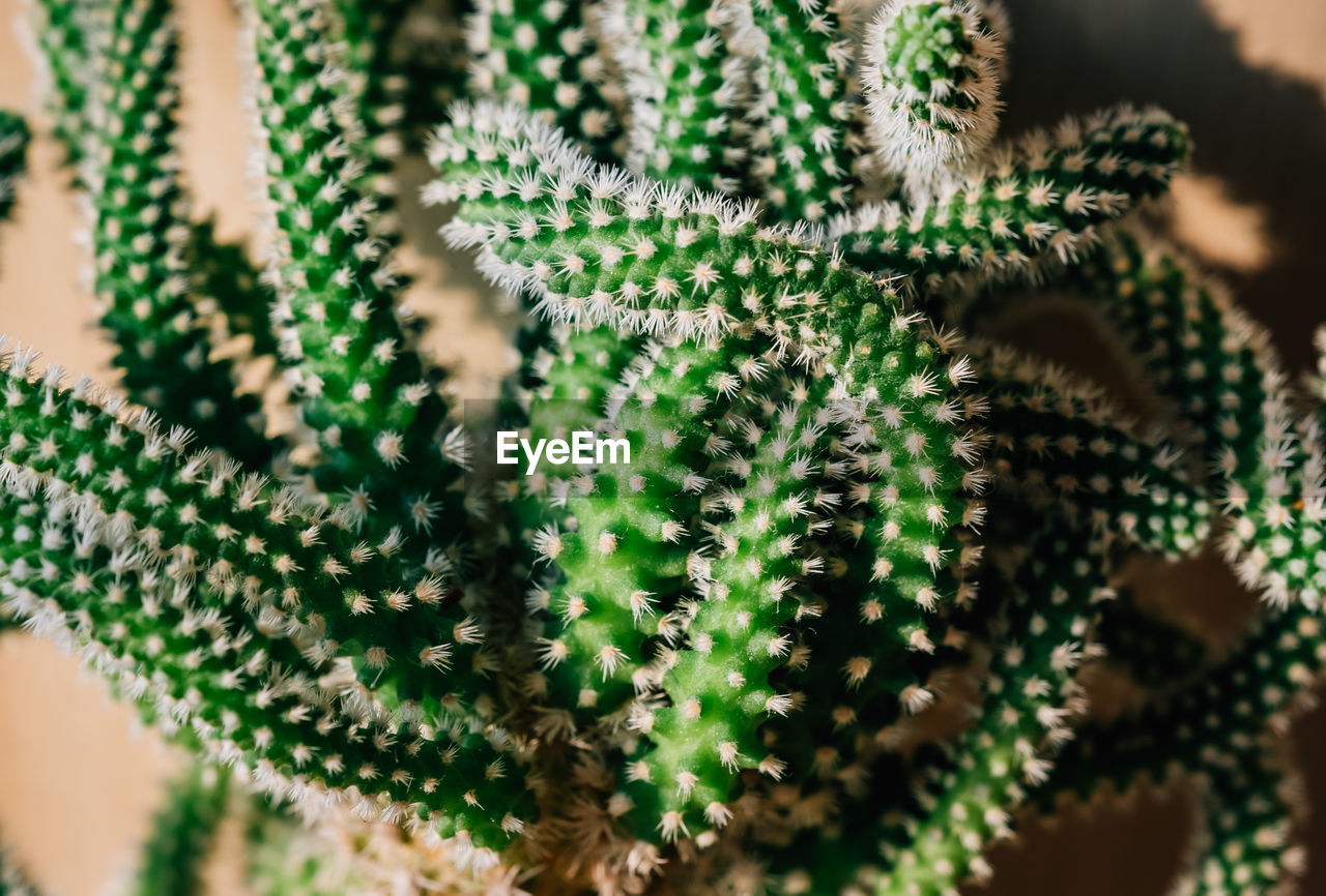 close-up, selective focus, plant, green color, growth, succulent plant, no people, cactus, nature, day, beauty in nature, indoors, full frame, fragility, vulnerability, potted plant, freshness, decoration, pattern, focus on foreground