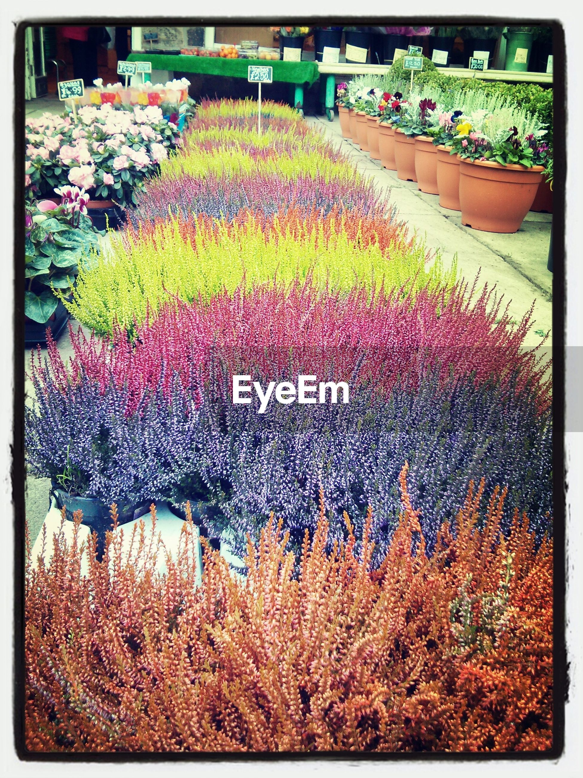 transfer print, flower, auto post production filter, freshness, growth, plant, abundance, variation, beauty in nature, multi colored, fragility, flowerbed, nature, field, high angle view, outdoors, day, blooming, park - man made space, garden