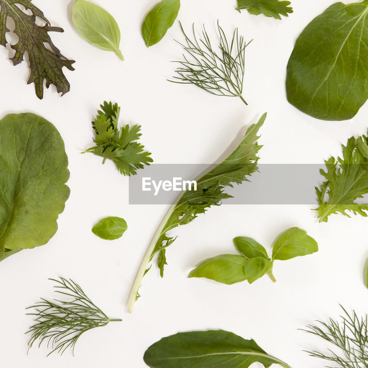 High Angle View Of Various Leaves On White Background