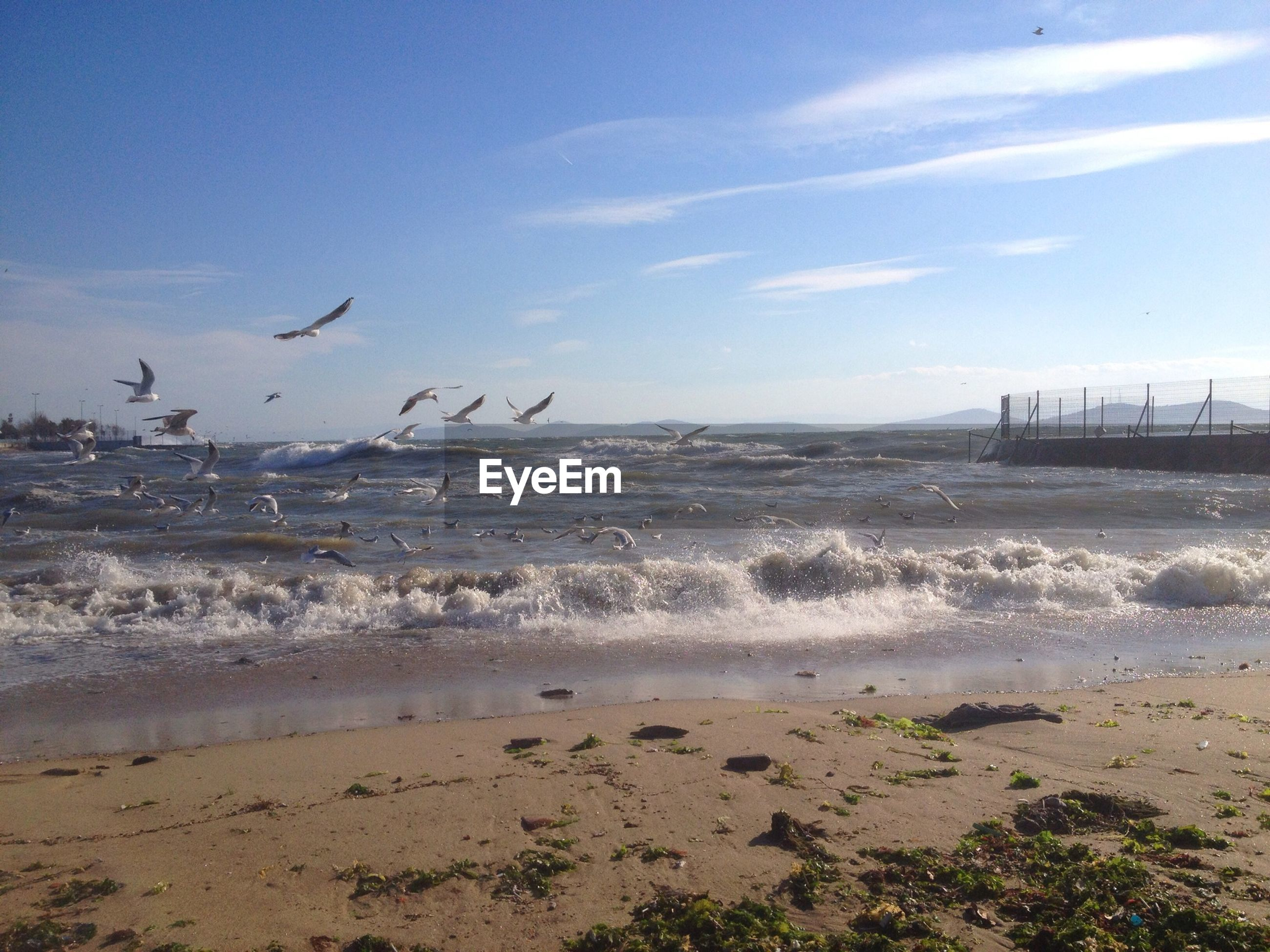 sea, water, beach, horizon over water, bird, sky, shore, scenics, animal themes, wave, tranquil scene, beauty in nature, sand, tranquility, nature, animals in the wild, wildlife, seagull, surf, idyllic