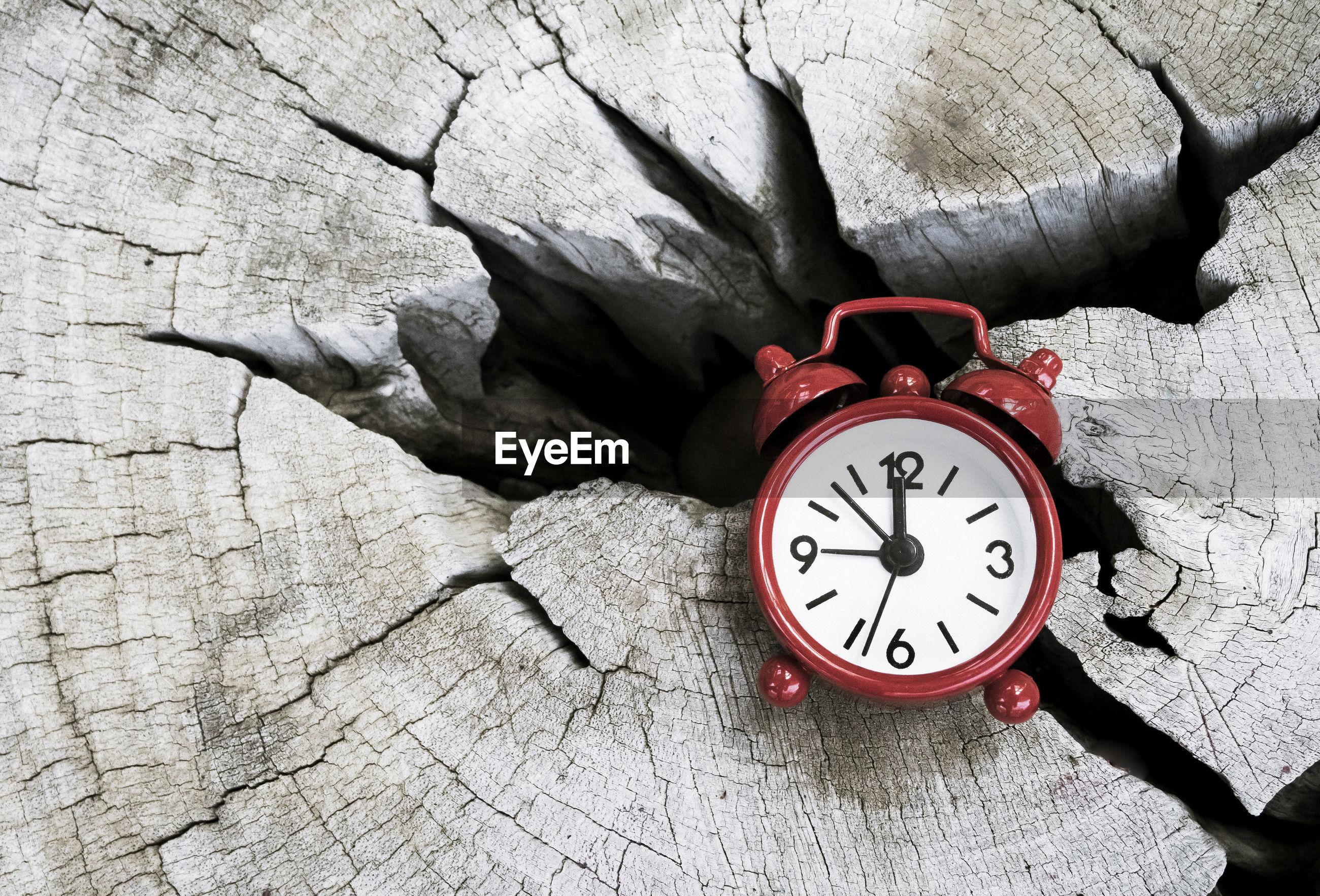 High angle view of alarm clock on tree stump