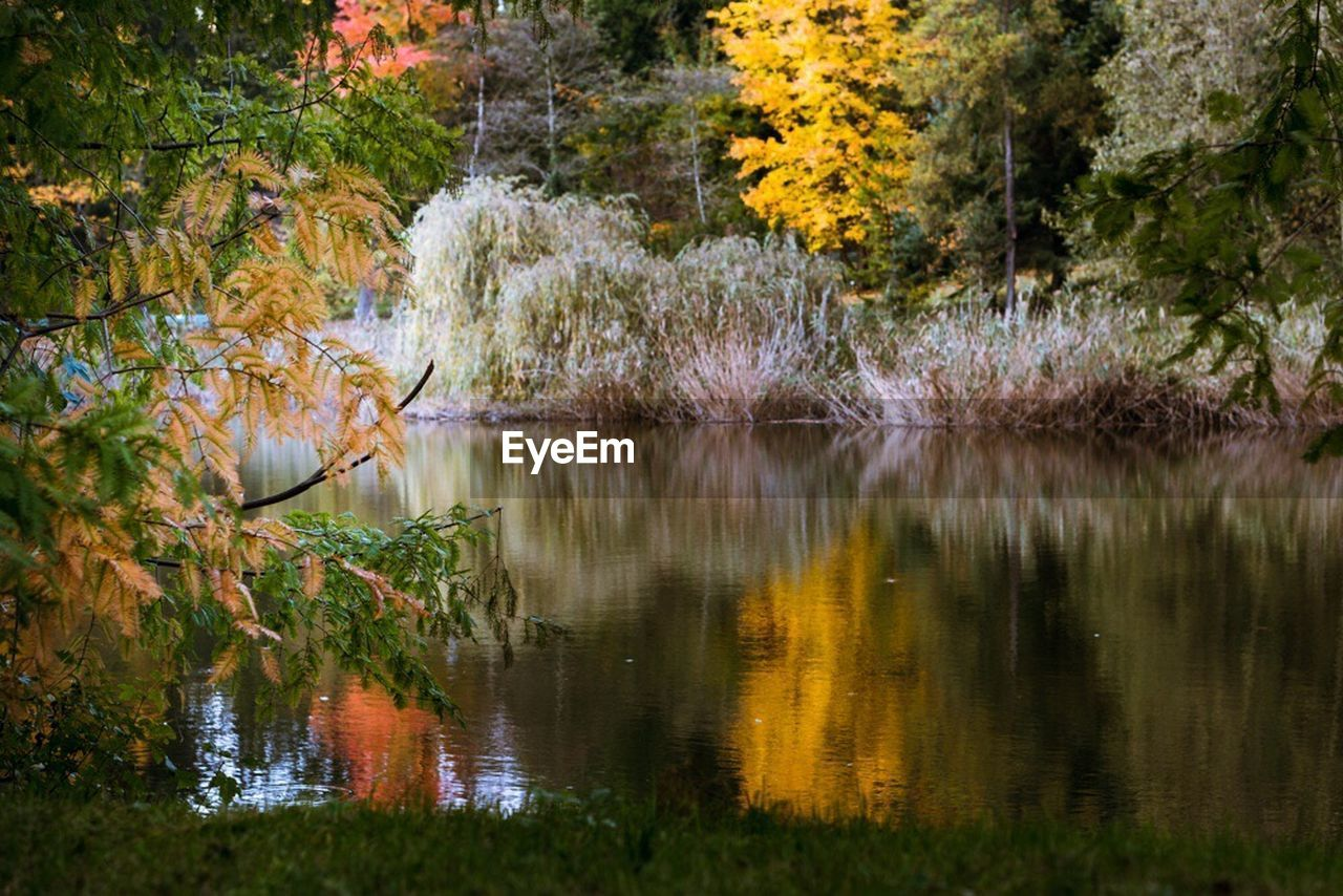 reflection, lake, tree, nature, water, autumn, scenics, beauty in nature, tranquil scene, outdoors, no people, tranquility, forest, leaf, grass, animals in the wild, plant, day, bird, animal themes