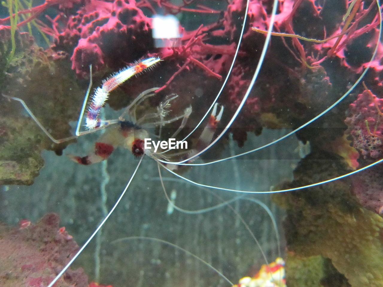 Close-up of shrimp in sea