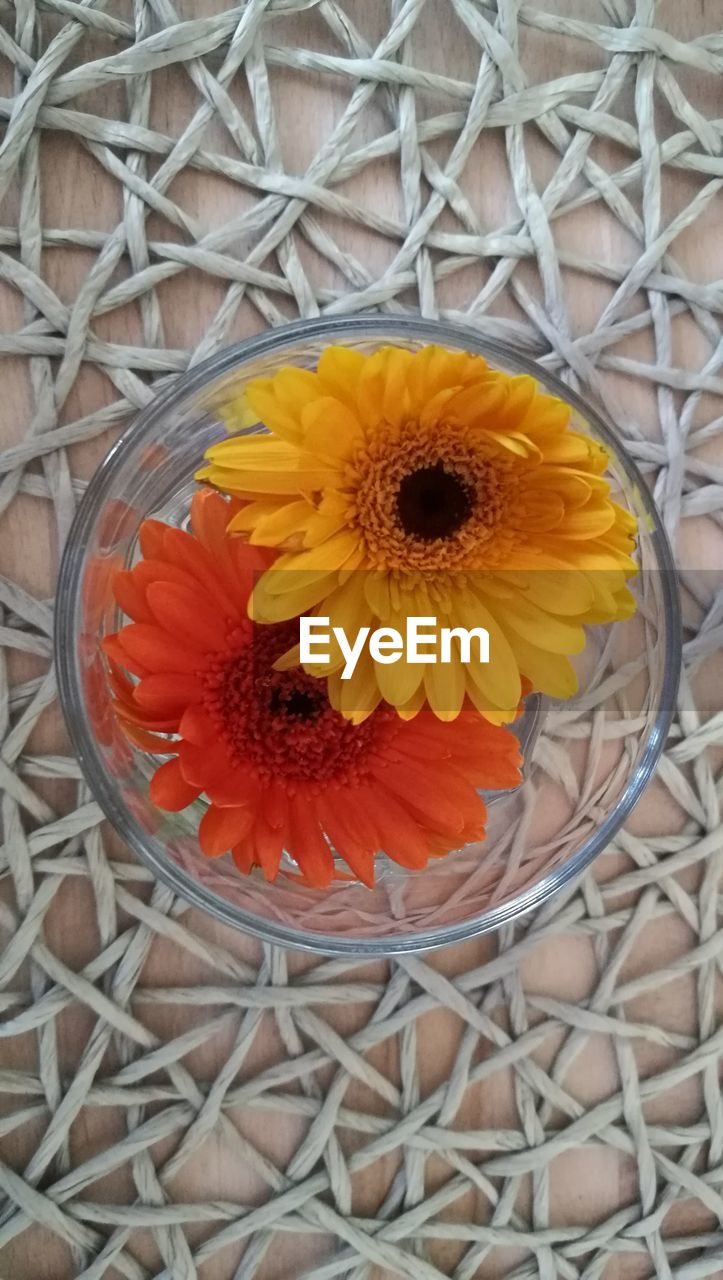 flower, petal, yellow, freshness, fragility, beauty in nature, flower head, no people, nature, close-up, sunflower, blooming, outdoors, day
