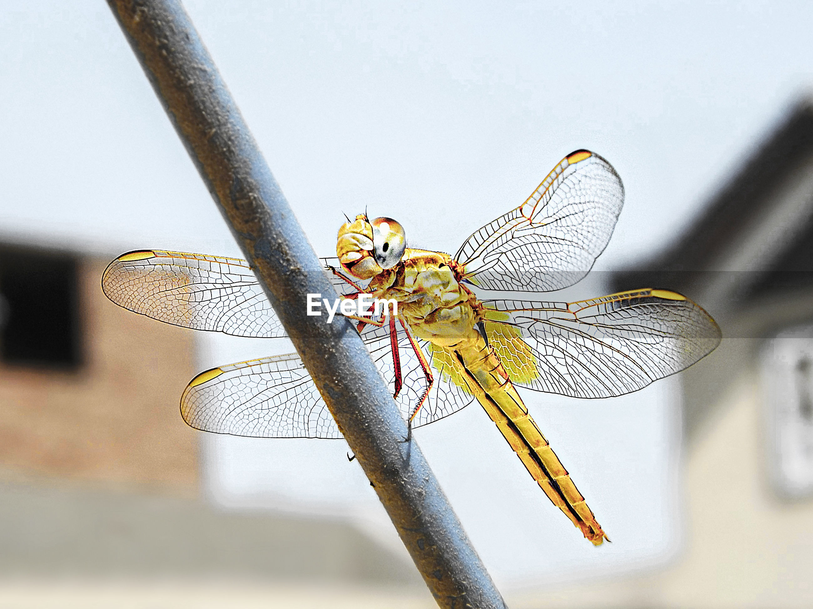 VIEW OF DRAGONFLY ON LEAF