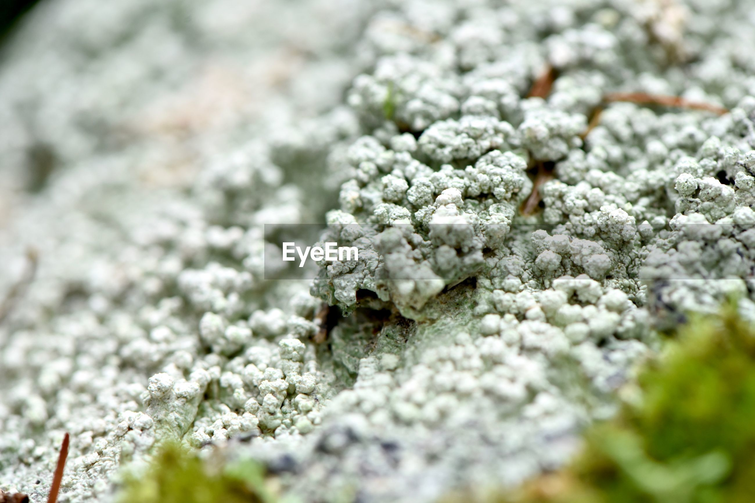 selective focus, no people, close-up, plant, flower, nature, full frame, day, food, growth, flowering plant, freshness, white color, food and drink, healthcare and medicine, outdoors, green color, backgrounds, beauty in nature