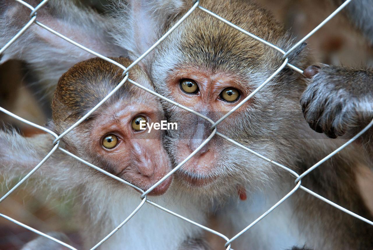 Portrait of monkeys in cage