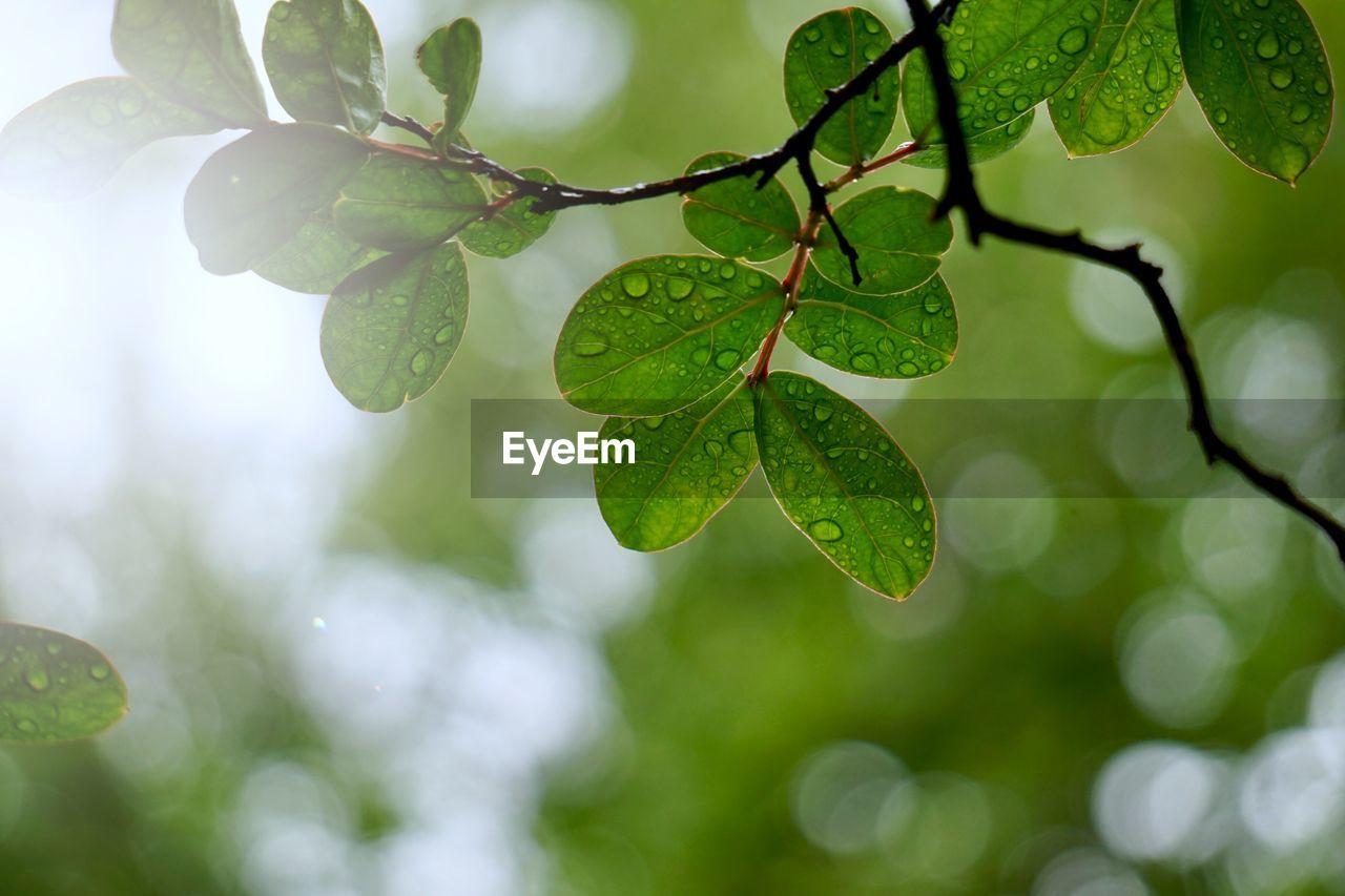 plant part, leaf, plant, growth, green color, close-up, nature, beauty in nature, no people, focus on foreground, tree, day, freshness, outdoors, selective focus, drop, branch, water, sunlight, leaves