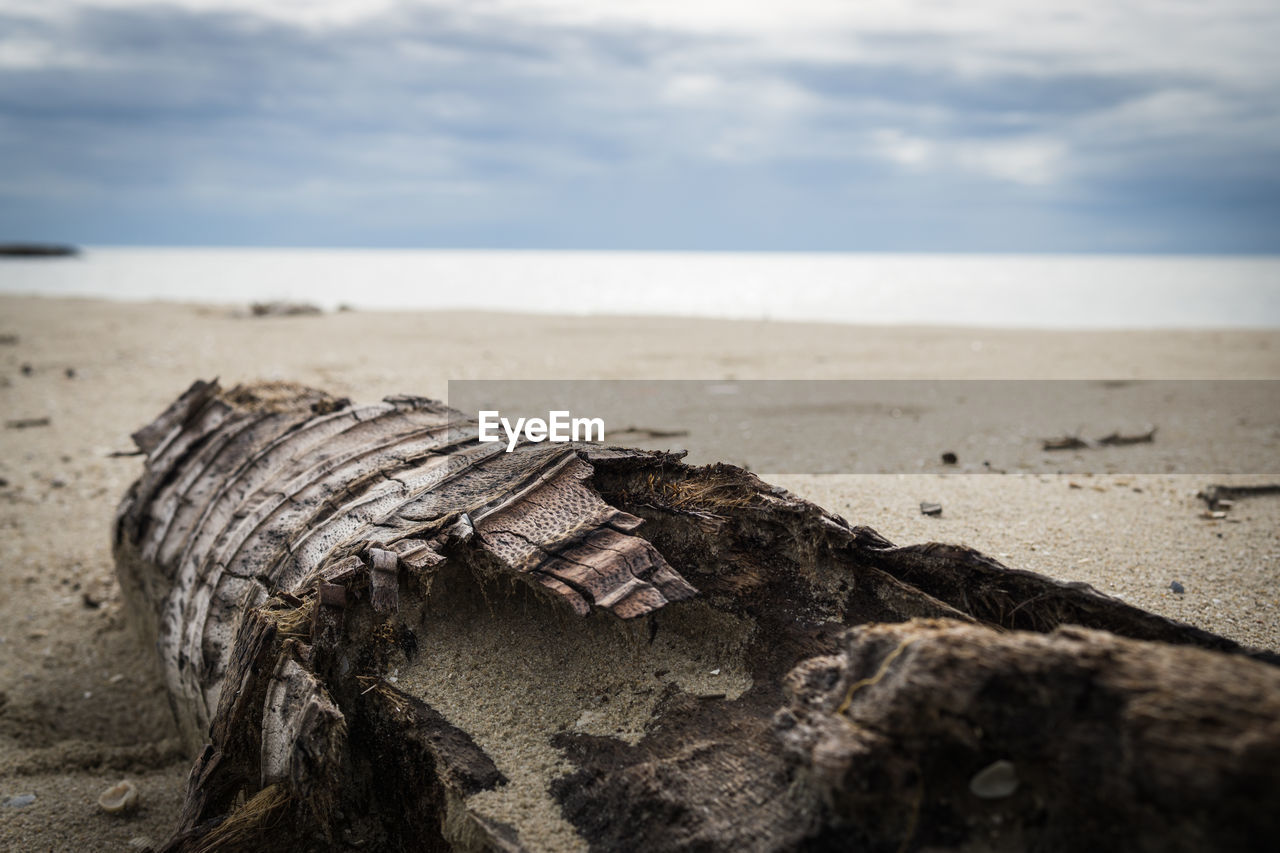 beach, land, sea, horizon over water, water, sky, horizon, nature, tranquility, beauty in nature, sand, focus on foreground, scenics - nature, tranquil scene, no people, close-up, rock, day, wood - material, outdoors, wood, driftwood