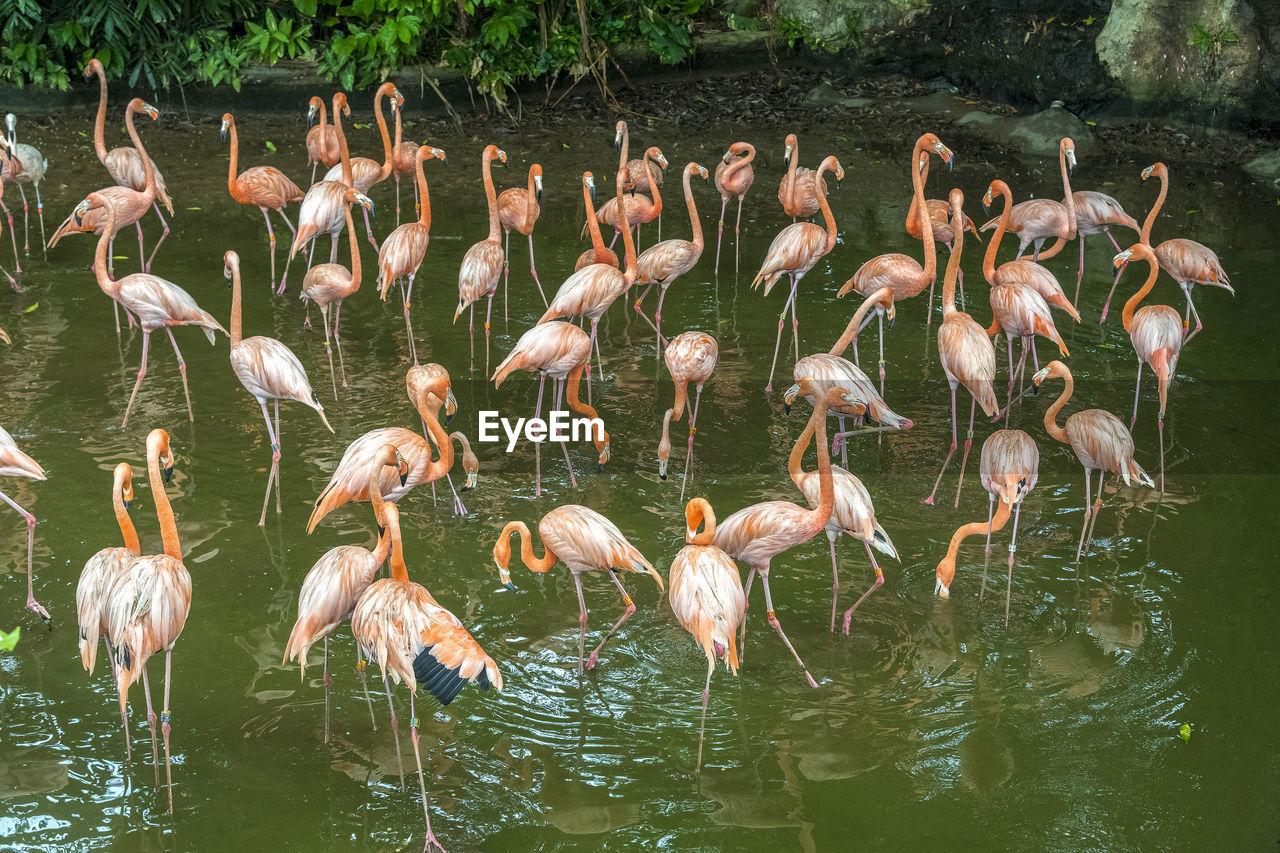 FLOCK OF BIRDS ON LAKE