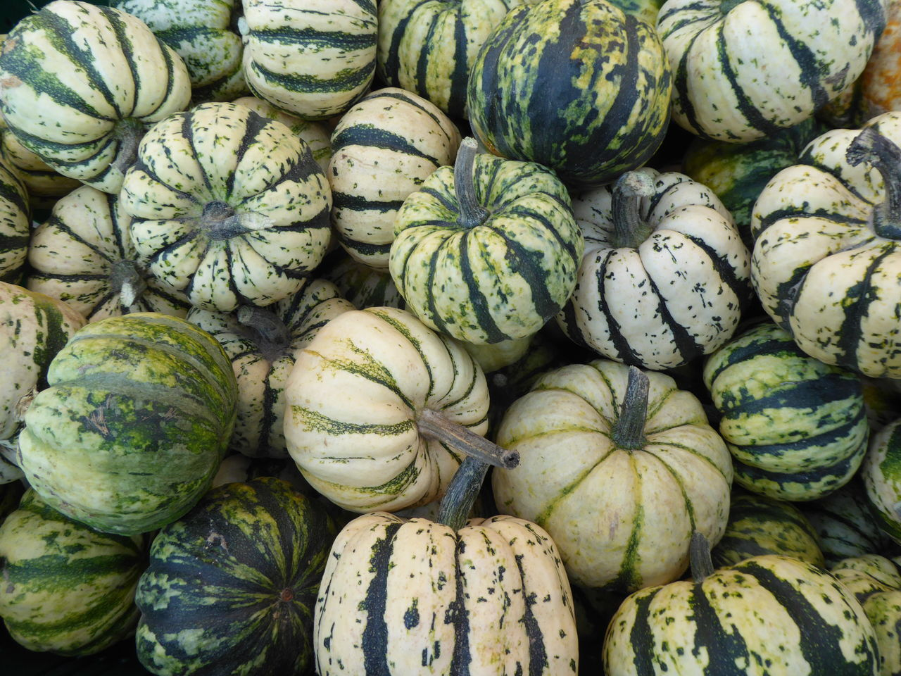 food and drink, food, freshness, healthy eating, wellbeing, large group of objects, full frame, abundance, backgrounds, for sale, no people, market, pumpkin, vegetable, day, close-up, retail, green color, high angle view, organic, outdoors, melon, ripe