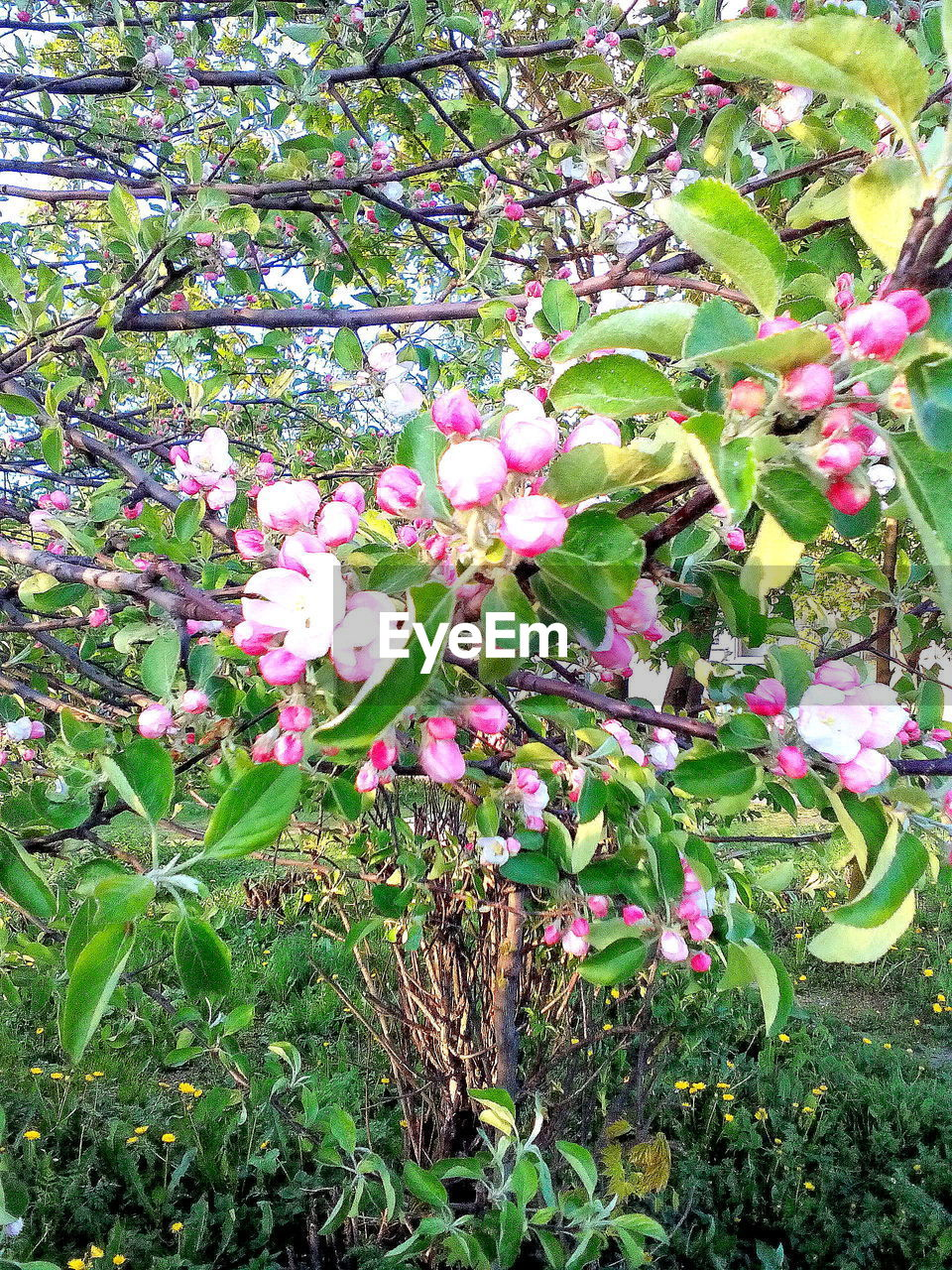 flower, growth, beauty in nature, fragility, nature, pink color, freshness, no people, plant, blossom, day, petal, leaf, springtime, green color, outdoors, blooming, branch, tree, flower head, grass, close-up