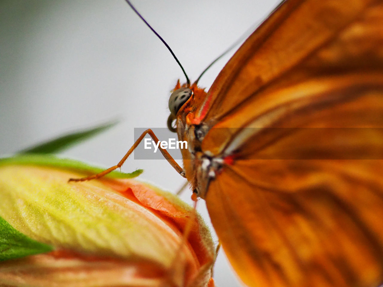 CLOSE-UP OF ORANGE BUTTERFLY