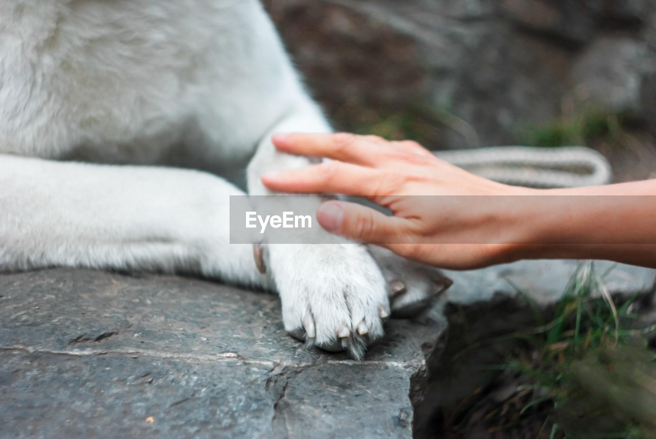 CLOSE-UP OF HUMAN HAND TOUCHING ANIMAL