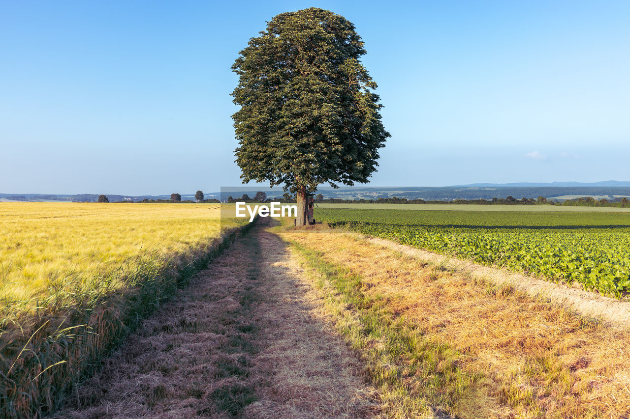 field, land, landscape, sky, plant, tranquility, environment, tranquil scene, growth, beauty in nature, agriculture, rural scene, tree, nature, scenics - nature, direction, day, farm, the way forward, diminishing perspective, no people, outdoors