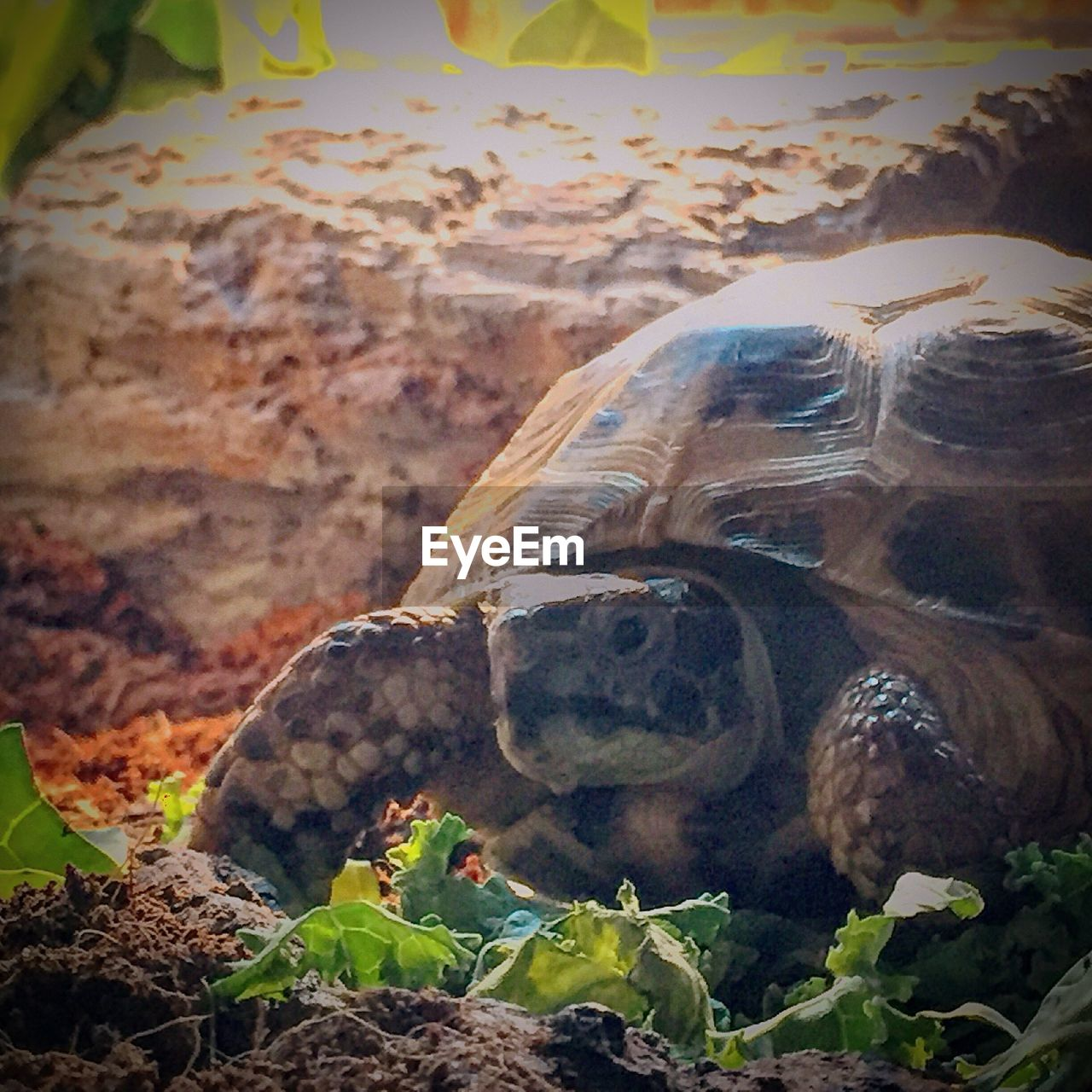 nature, no people, outdoors, animals in the wild, day, animal themes, beauty in nature, one animal, close-up, mammal, tortoise shell