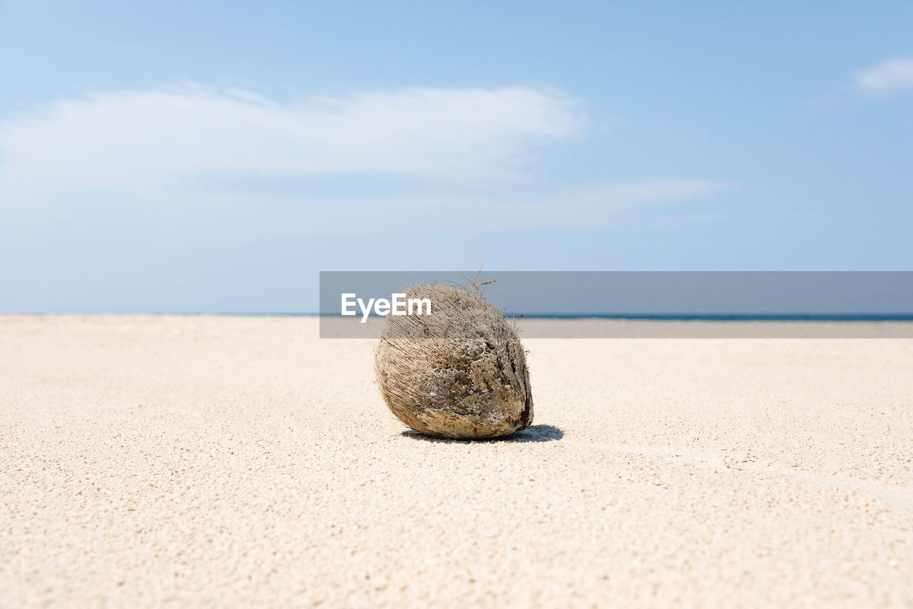 land, beach, sand, sea, sky, nature, horizon, horizon over water, water, tranquility, beauty in nature, day, cloud - sky, no people, tranquil scene, scenics - nature, close-up, outdoors, focus on foreground, surface level