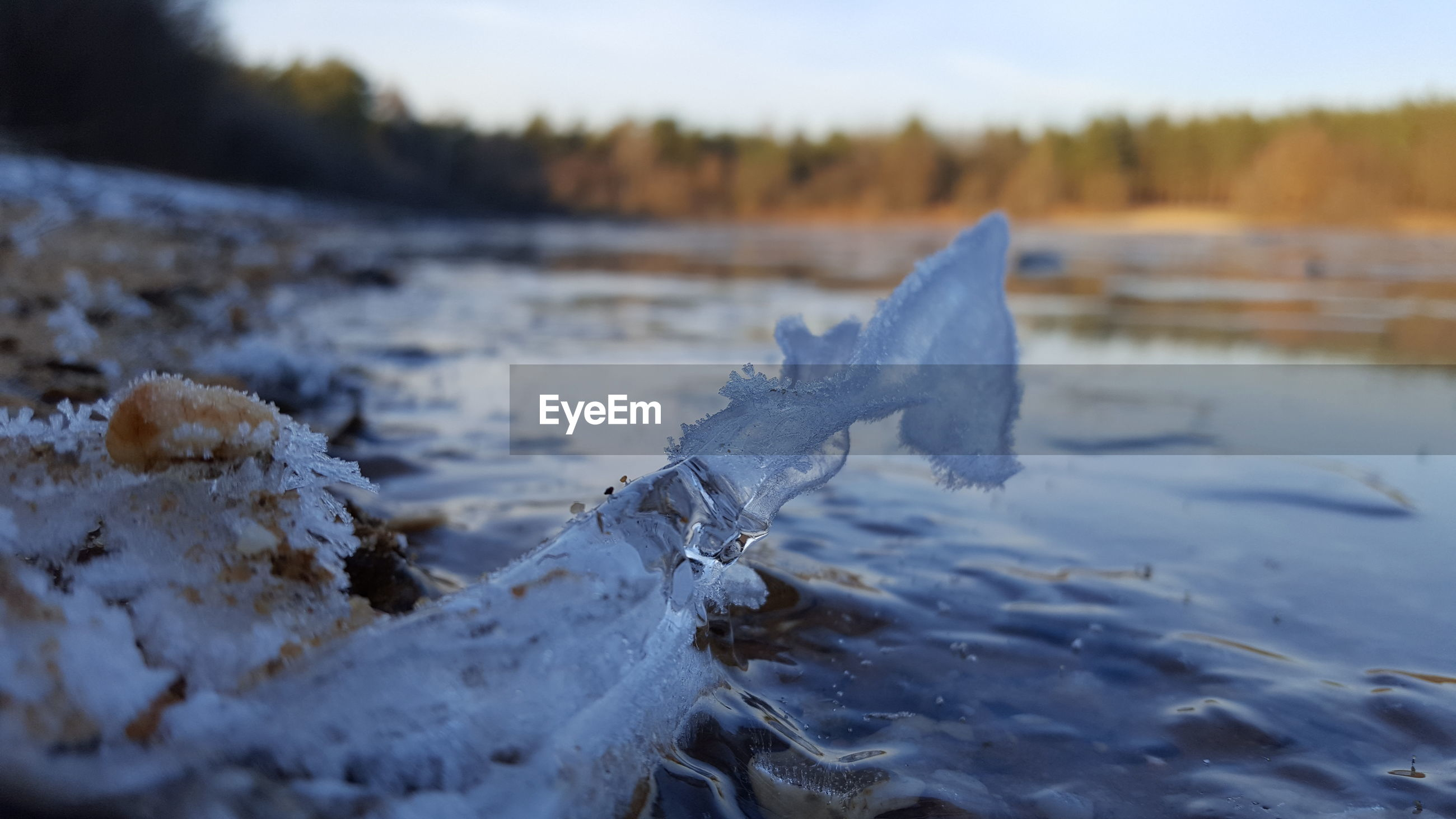 Close-up of frozen water on land
