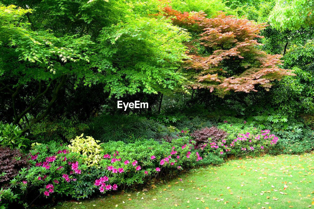 SCENIC VIEW OF PINK FLOWERING PLANTS IN GARDEN