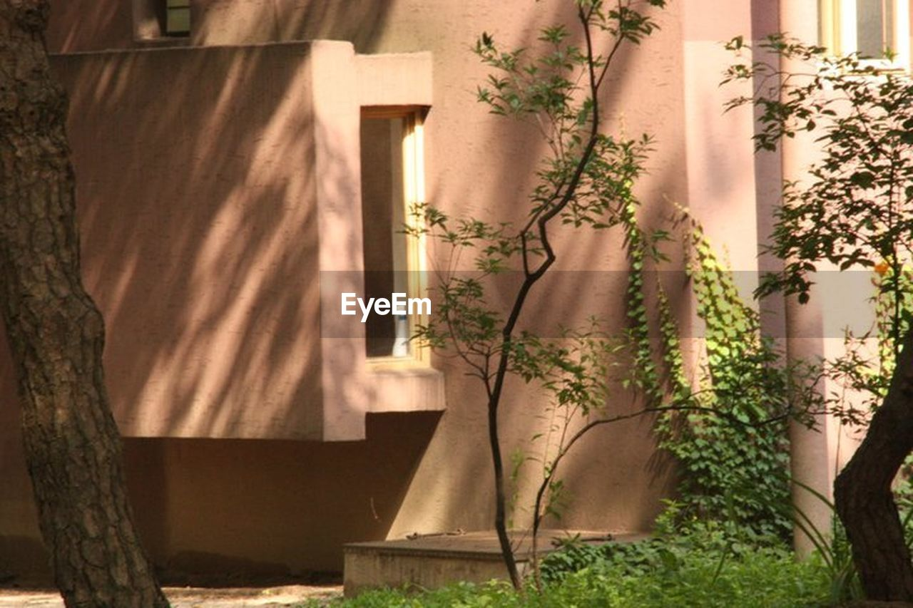 curtain, day, architecture, plant, shadow, built structure, sunlight, no people, outdoors, nature, tree, building exterior