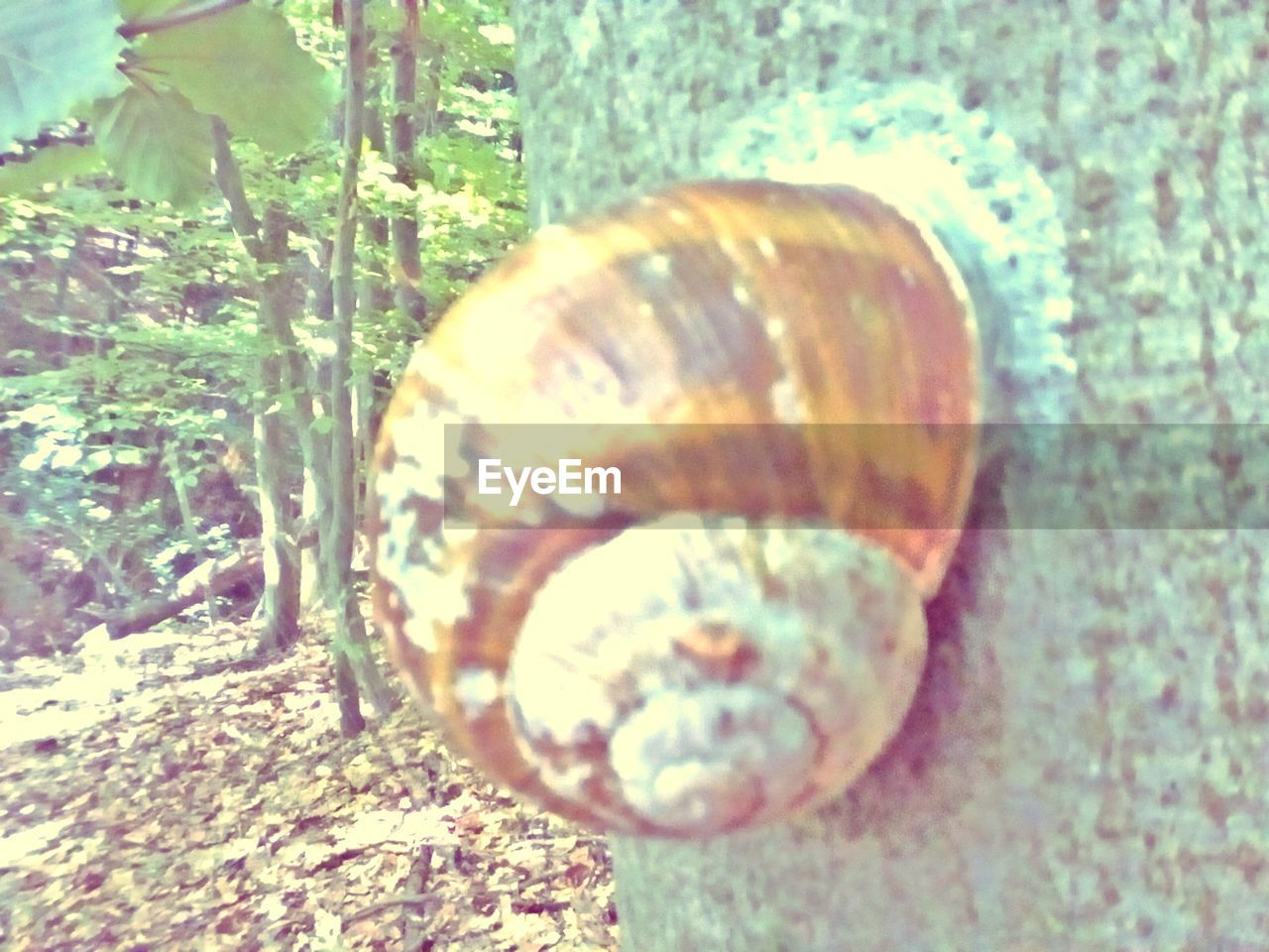shell, animal shell, animal wildlife, close-up, animals in the wild, no people, animal, animal themes, day, nature, one animal, snail, mollusk, invertebrate, selective focus, gastropod, natural pattern, sunlight, beauty in nature, land, outdoors