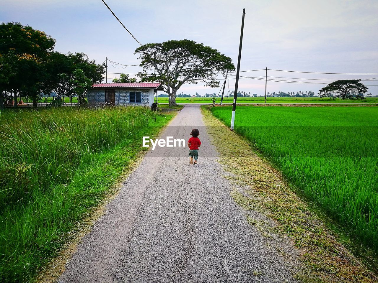 full length, real people, grass, rear view, one person, growth, day, the way forward, field, green color, walking, road, agriculture, outdoors, transportation, tree, sky, rural scene, plant, nature, childhood, people