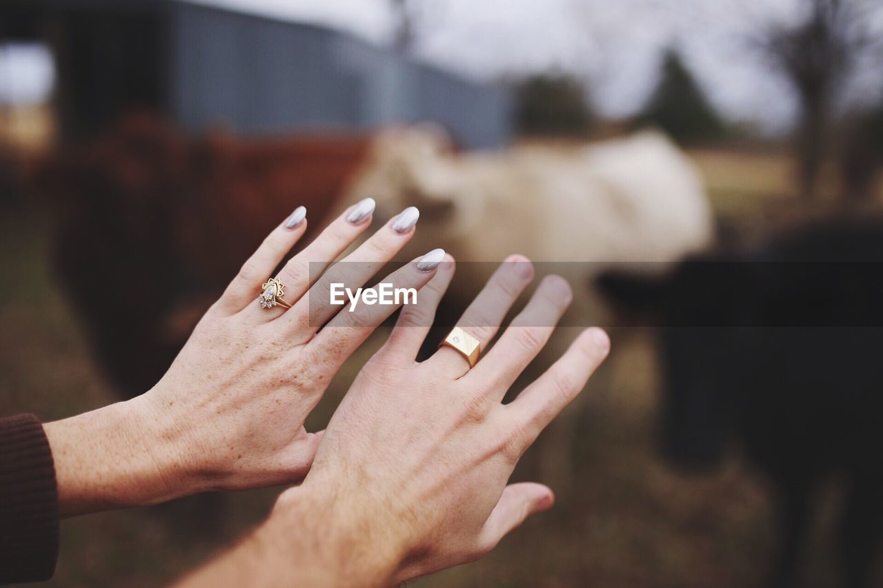 Cropped hands of couple showing wedding rings