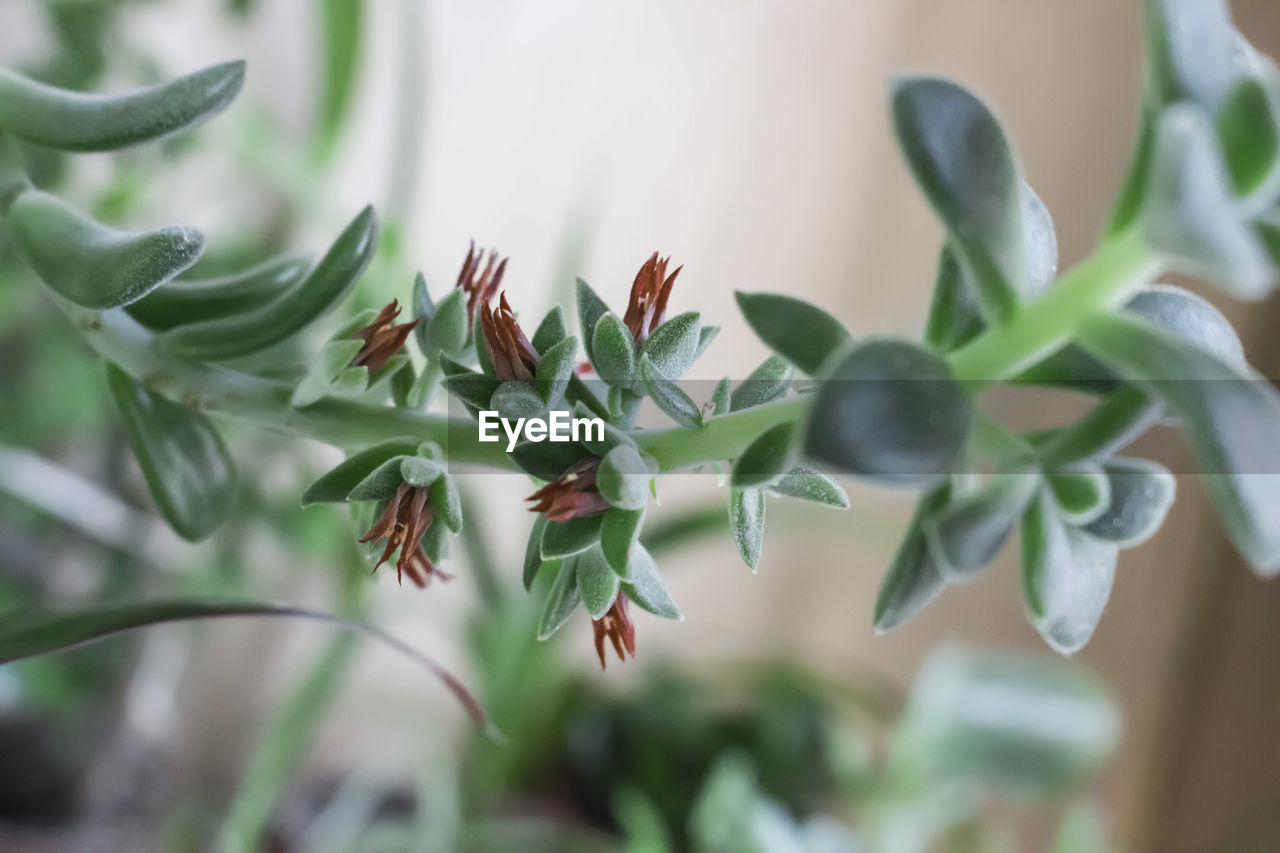 growth, leaf, no people, plant, close-up, green color, nature, freshness, day, fragility, beauty in nature, outdoors, flower, food