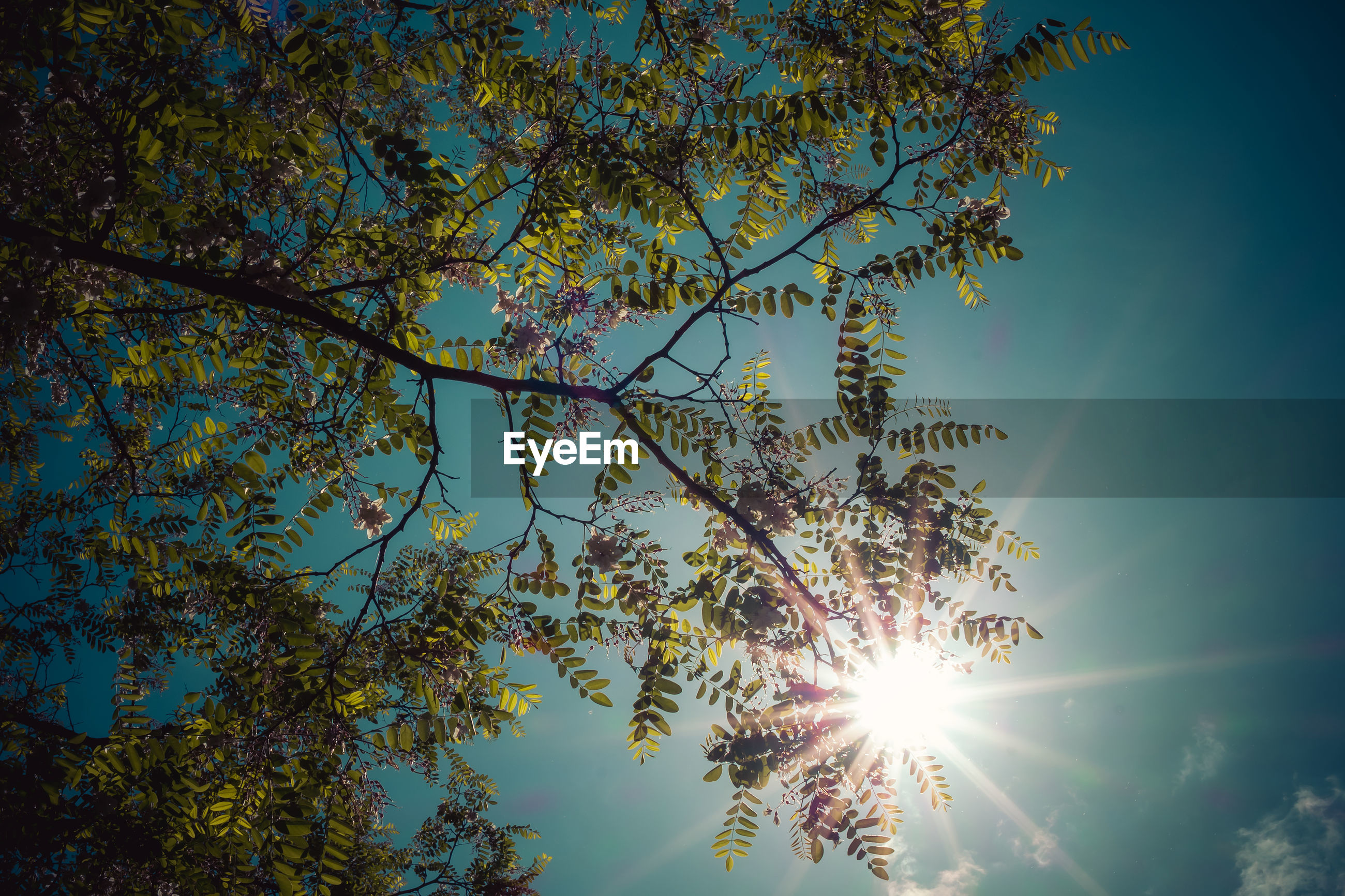 tree, sky, plant, sunlight, nature, beauty in nature, low angle view, sun, sunbeam, growth, tranquility, no people, lens flare, leaf, branch, blue, outdoors, reflection, scenics - nature, day, light, cloud, back lit, tranquil scene, plant part, flower, idyllic, sunny