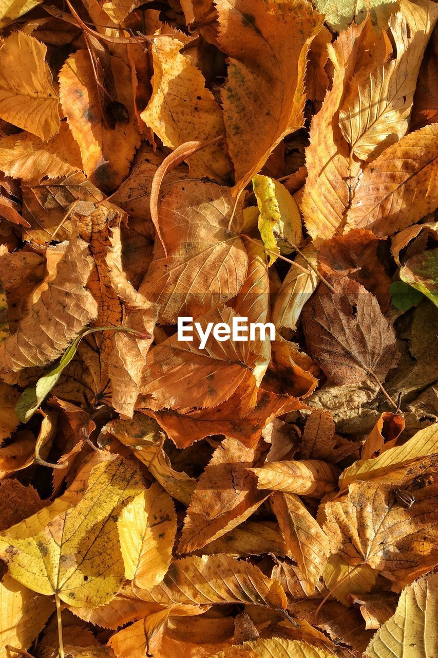 leaf, autumn, dry, change, day, no people, nature, backgrounds, fragility, outdoors, full frame, close-up