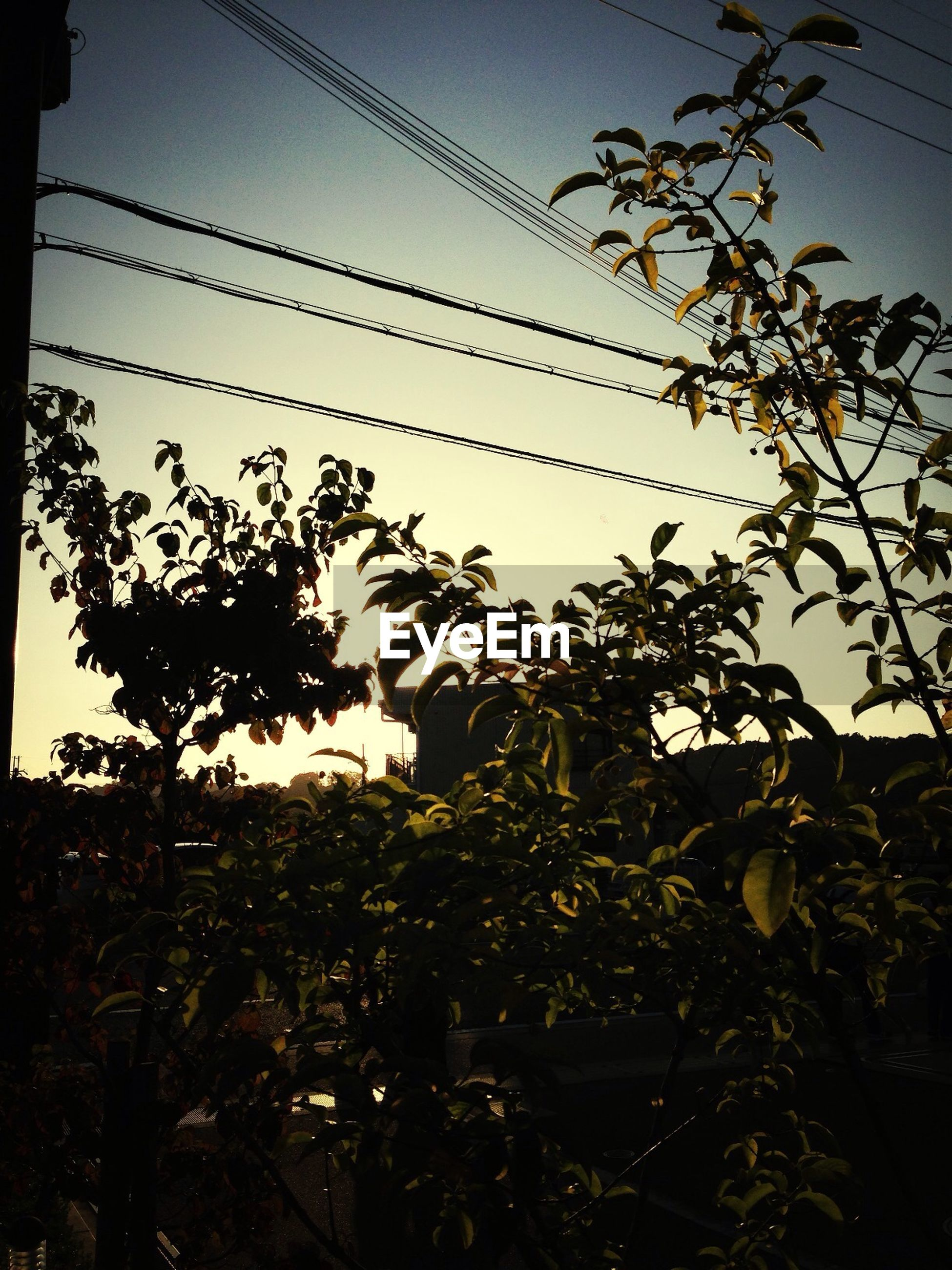 growth, clear sky, low angle view, plant, silhouette, tree, sky, power line, nature, leaf, branch, beauty in nature, flower, dusk, no people, outdoors, electricity pylon, cable, tranquility, stem