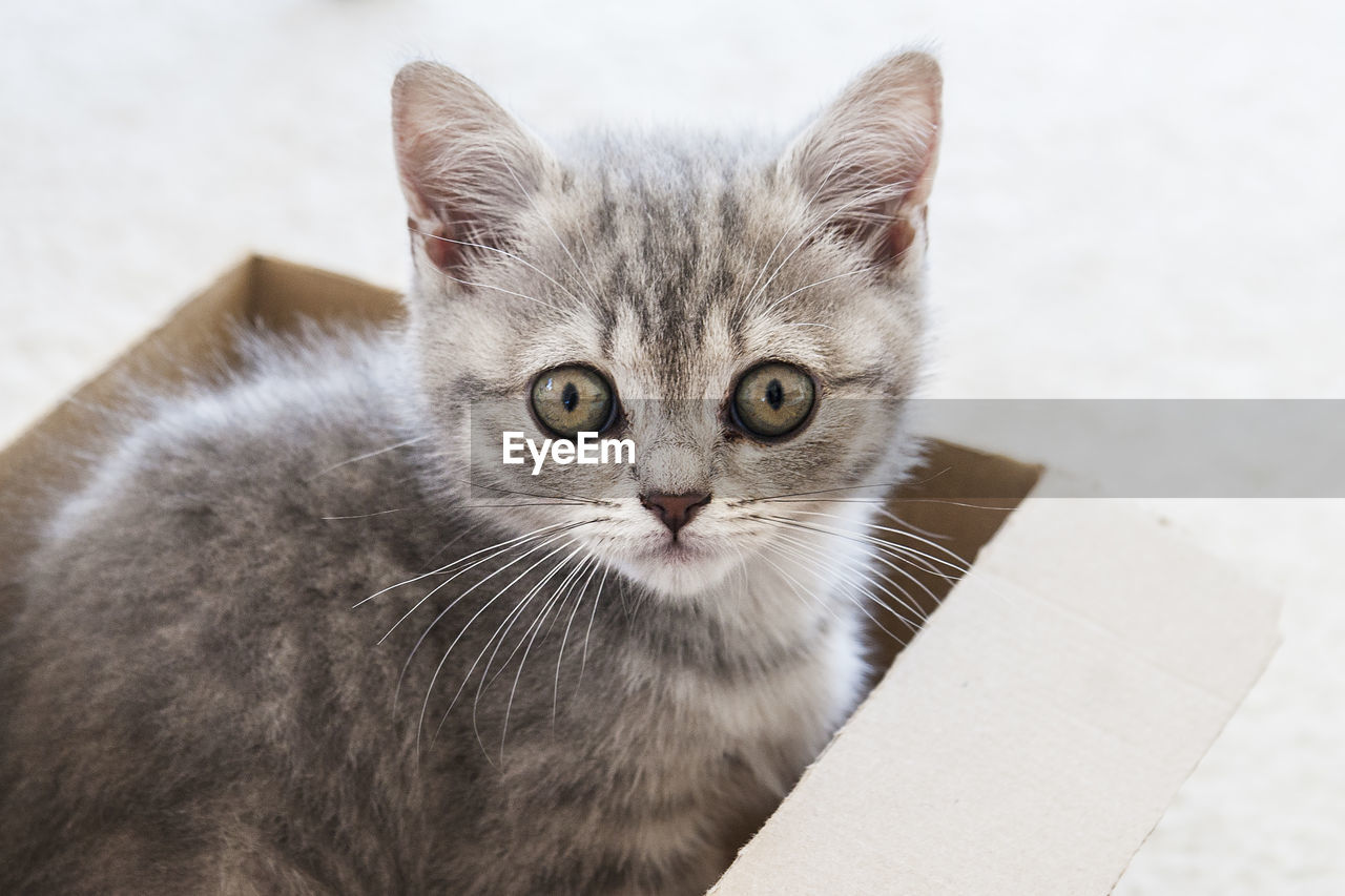 domestic cat, cat, pets, domestic, domestic animals, mammal, feline, one animal, looking at camera, vertebrate, portrait, whisker, no people, focus on foreground, close-up, animal body part, indoors, animal eye
