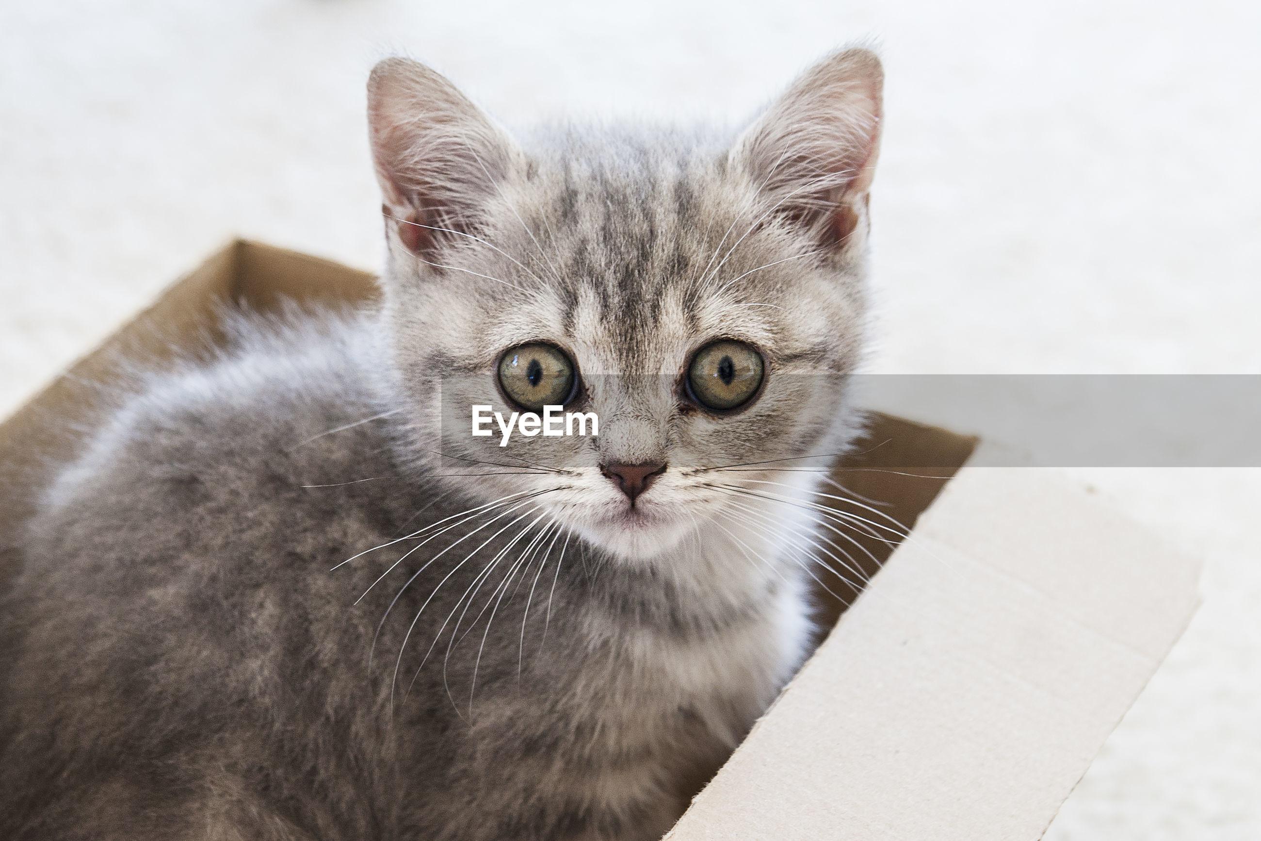CLOSE-UP PORTRAIT OF CAT IN BATHTUB