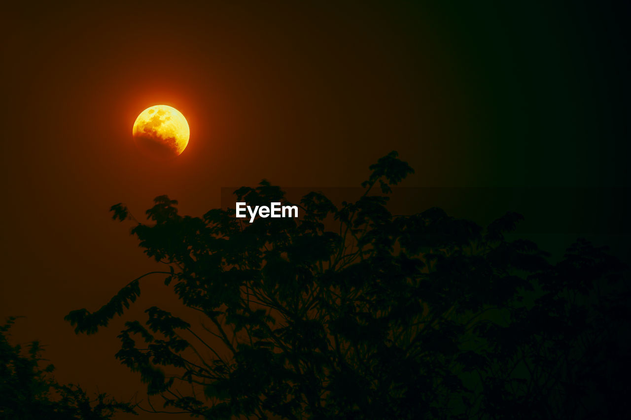 moon, night, full moon, beauty in nature, nature, tree, tranquil scene, scenics, sunset, tranquility, no people, sky, low angle view, moonlight, outdoors, astronomy, growth