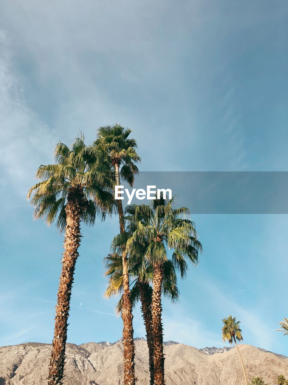 palm tree, tree, nature, sky, low angle view, day, beauty in nature, tranquility, tranquil scene, scenics, growth, tree trunk, no people, outdoors, cloud - sky