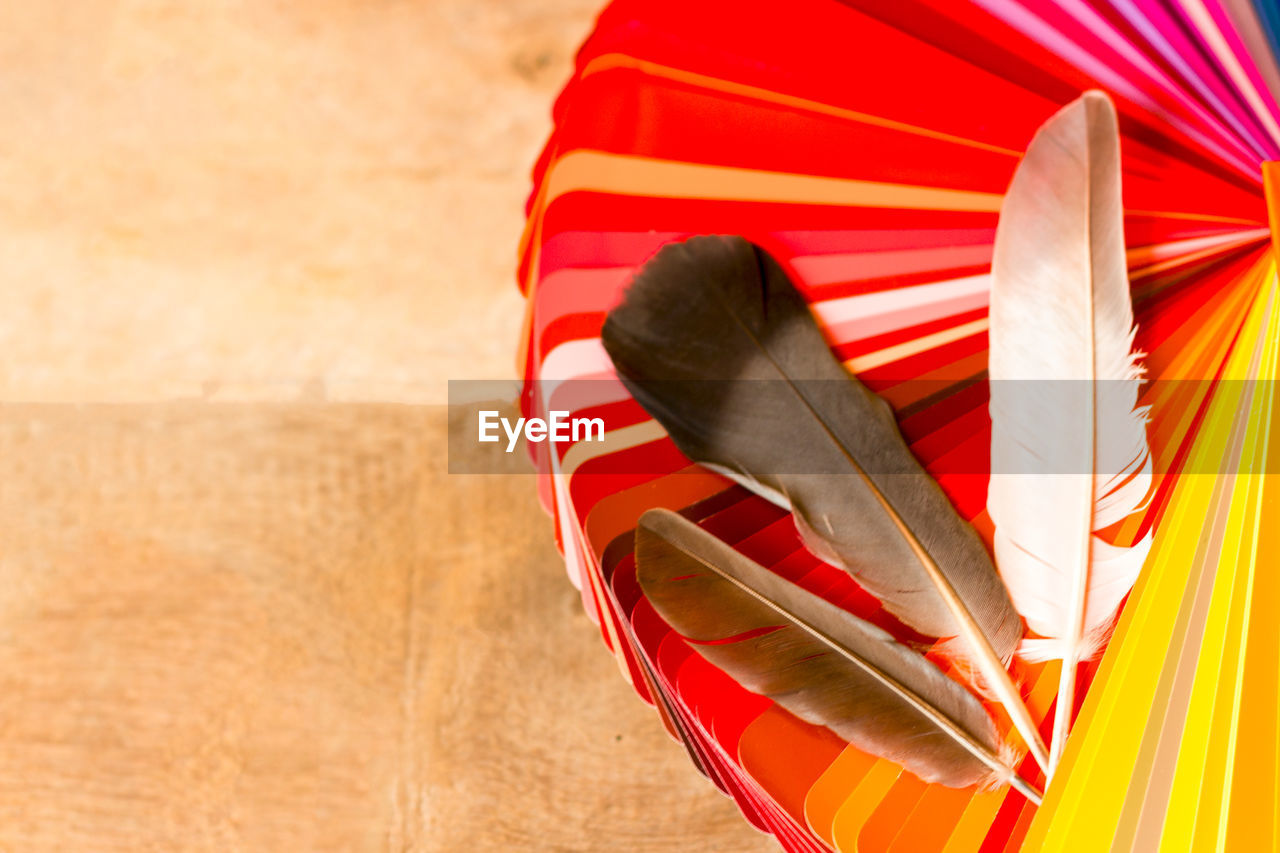 red, no people, striped, close-up, animal themes, animal, celebration, outdoors, textile, focus on foreground, one animal, holiday, animal wildlife, nature, day, vertebrate, flag