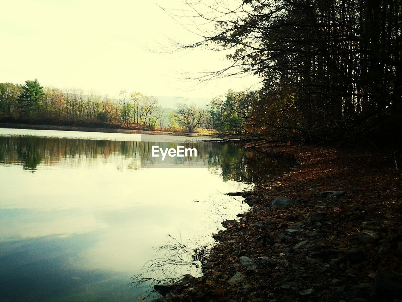 water, tree, reflection, lake, nature, tranquility, tranquil scene, beauty in nature, scenics, outdoors, no people, standing water, sky, day, forest
