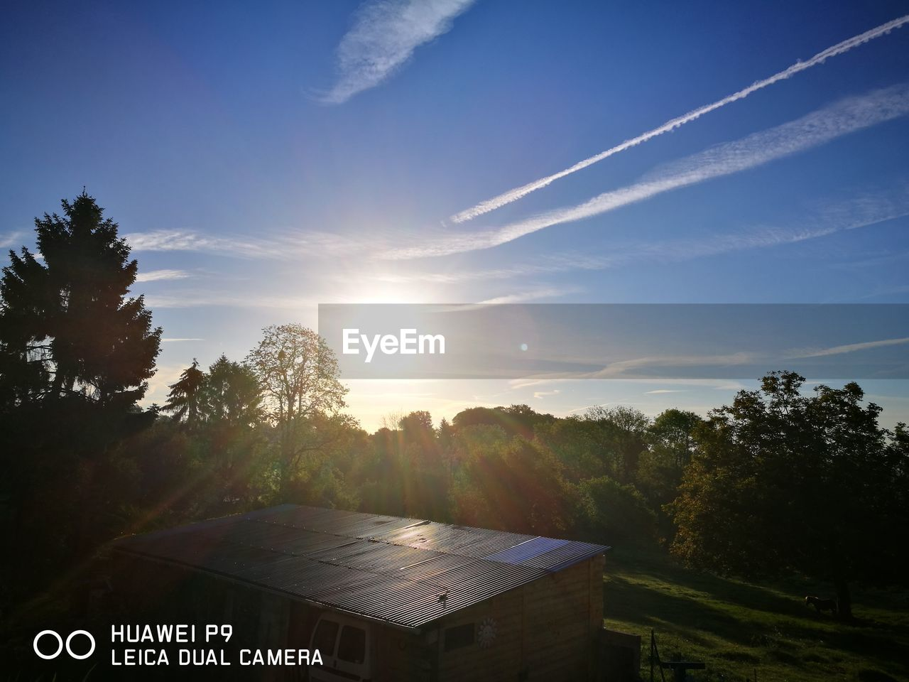 sun, tree, sunlight, sky, sunset, no people, nature, outdoors, day