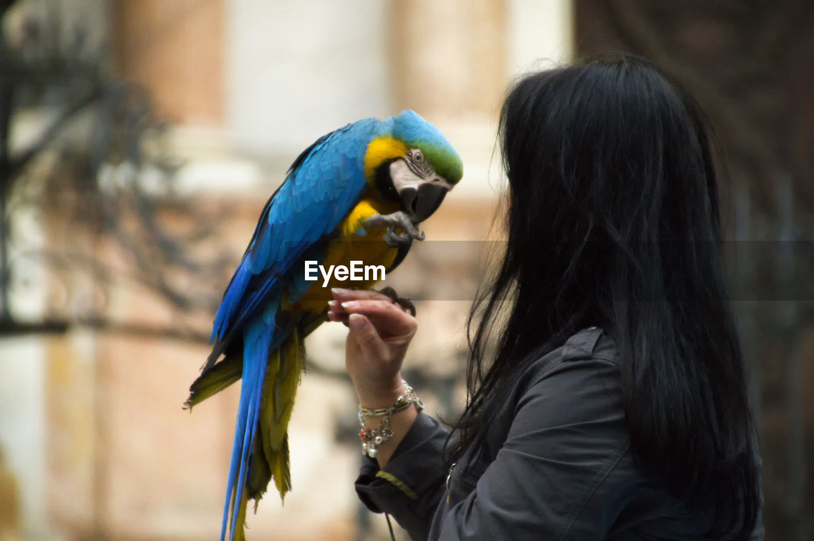Close-up of woman with gold and blue macaw