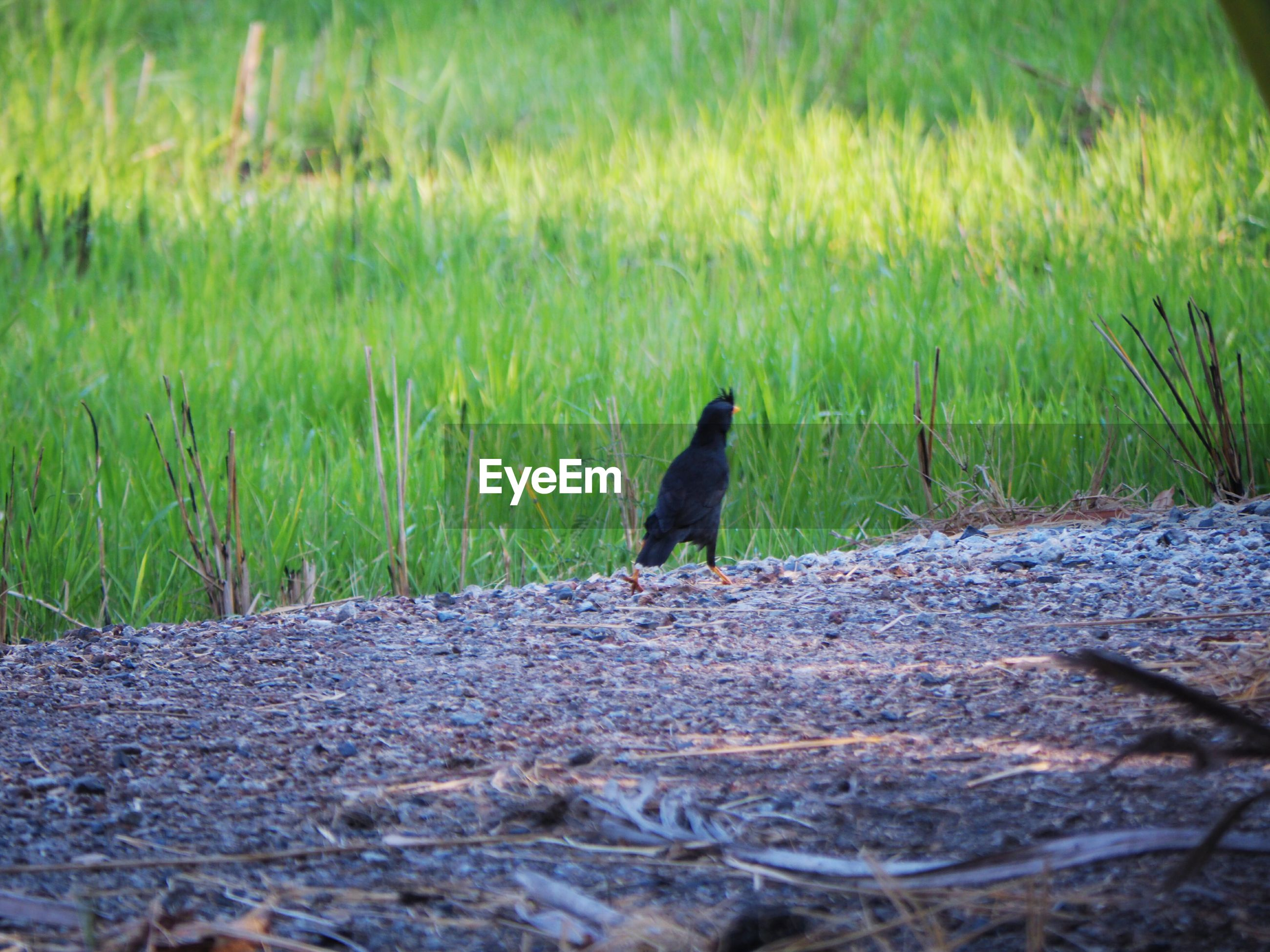 VIEW OF A BIRD SITTING ON FIELD