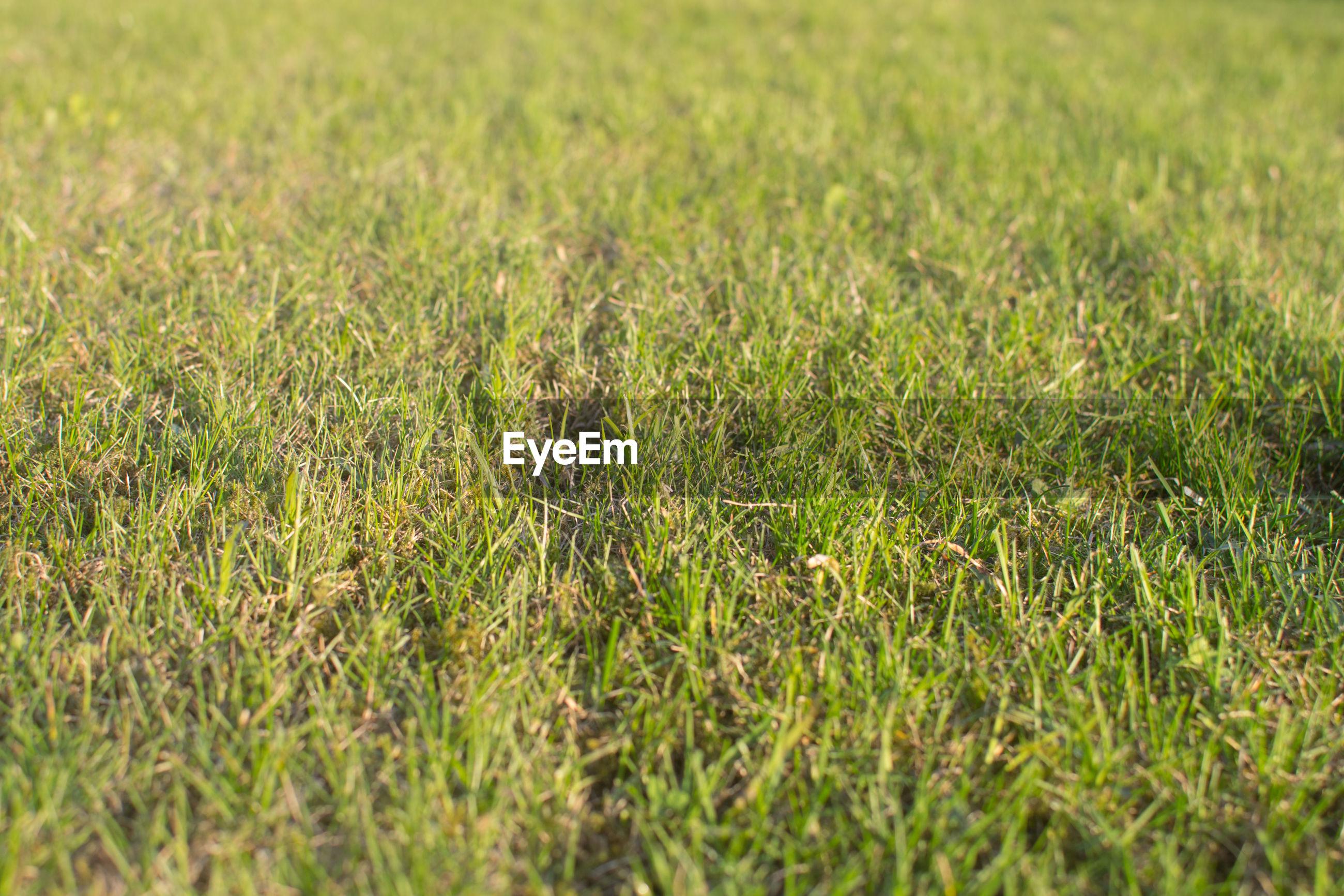 Full frame of lawn grass