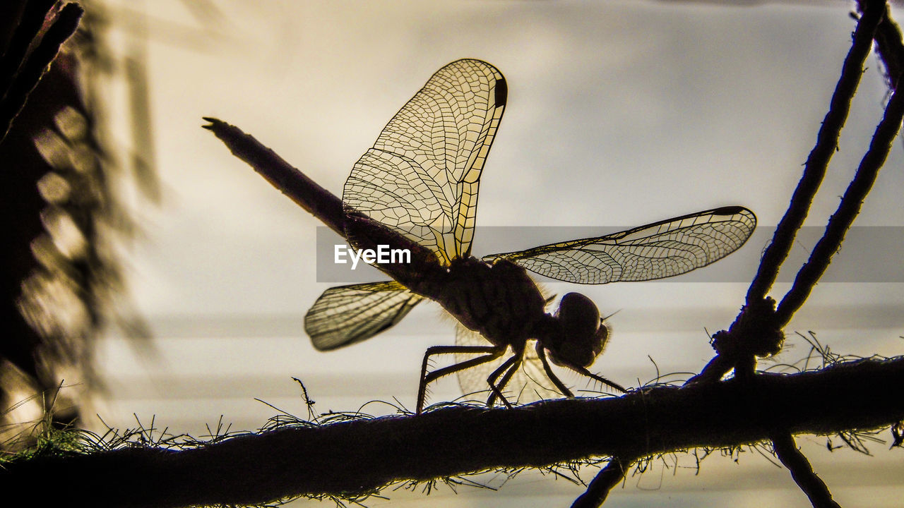 Close-Up Of Silhouette Dragonfly On Rope