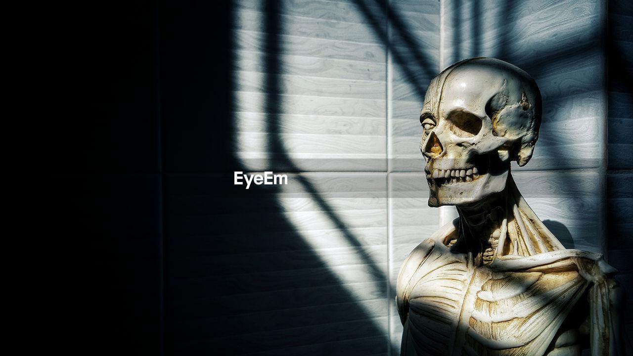 Close-Up Of Human Skeleton In Dark Room