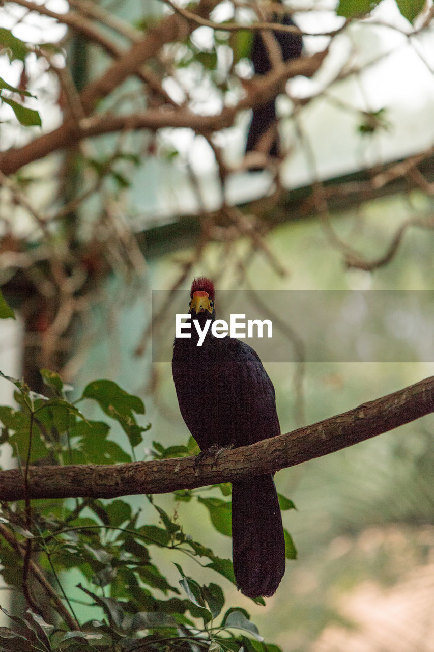 bird, animal themes, vertebrate, animal, animals in the wild, animal wildlife, one animal, perching, tree, plant, branch, focus on foreground, no people, nature, day, low angle view, outdoors, rear view, beauty in nature, zoology, eagle
